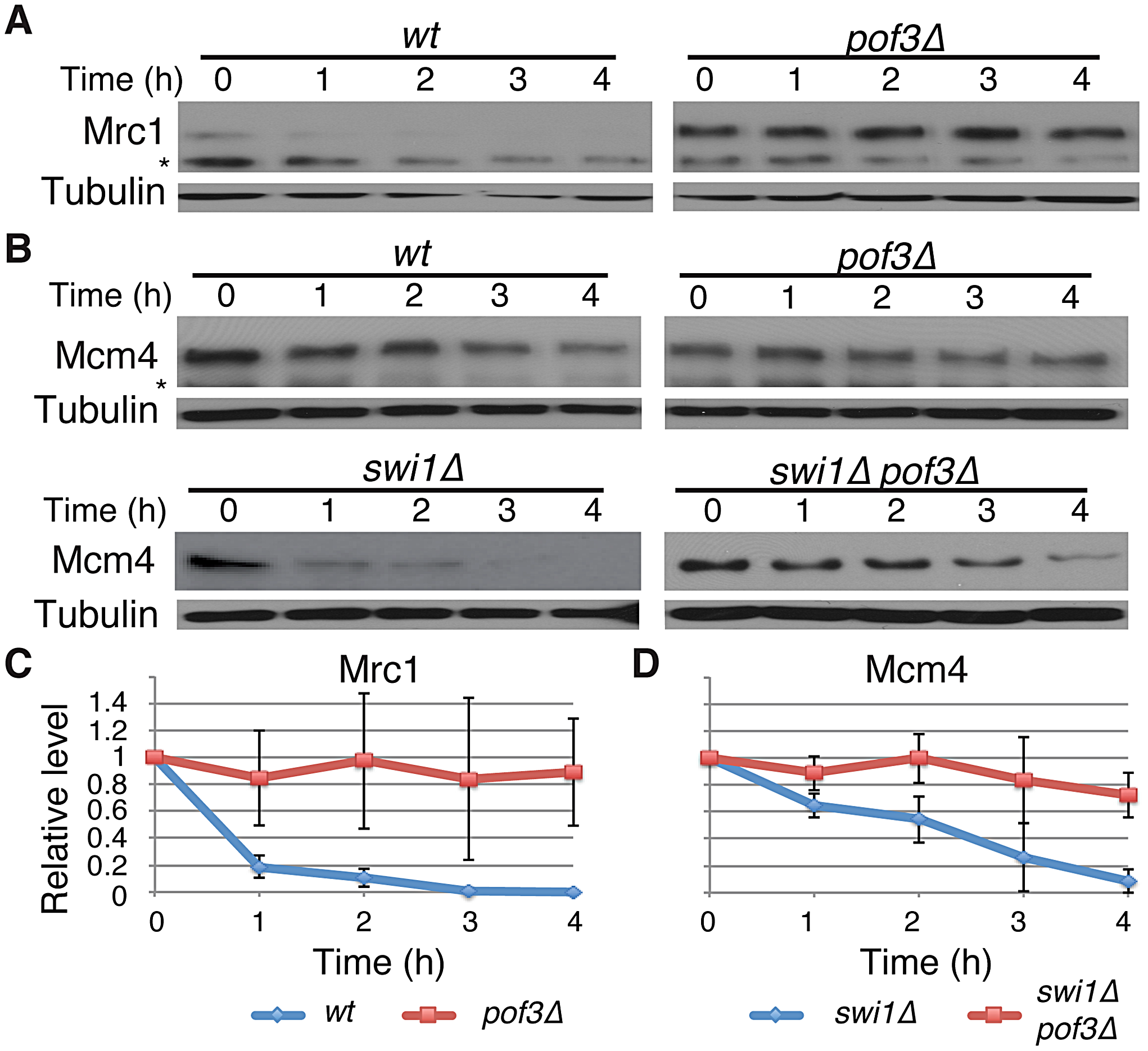 Pof3-dependent degradation of Mrc1 and Mcm4.