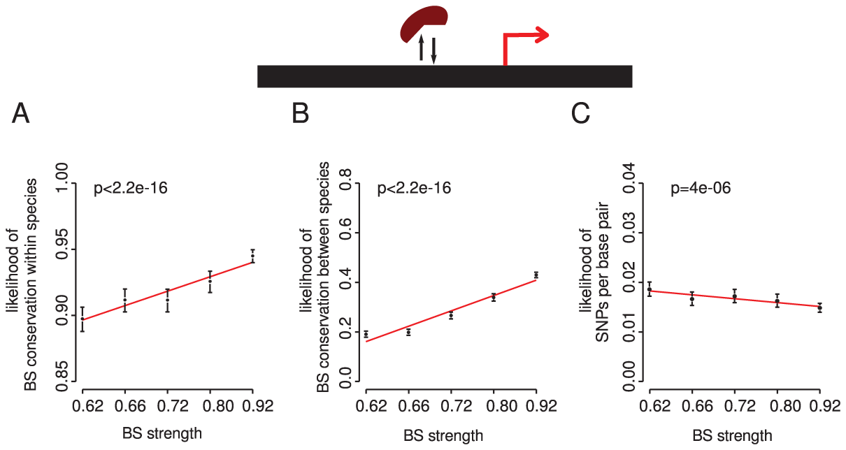 Stronger binding sites more closely matching the intrinsic binding preference for a TF are more conserved within and between species.