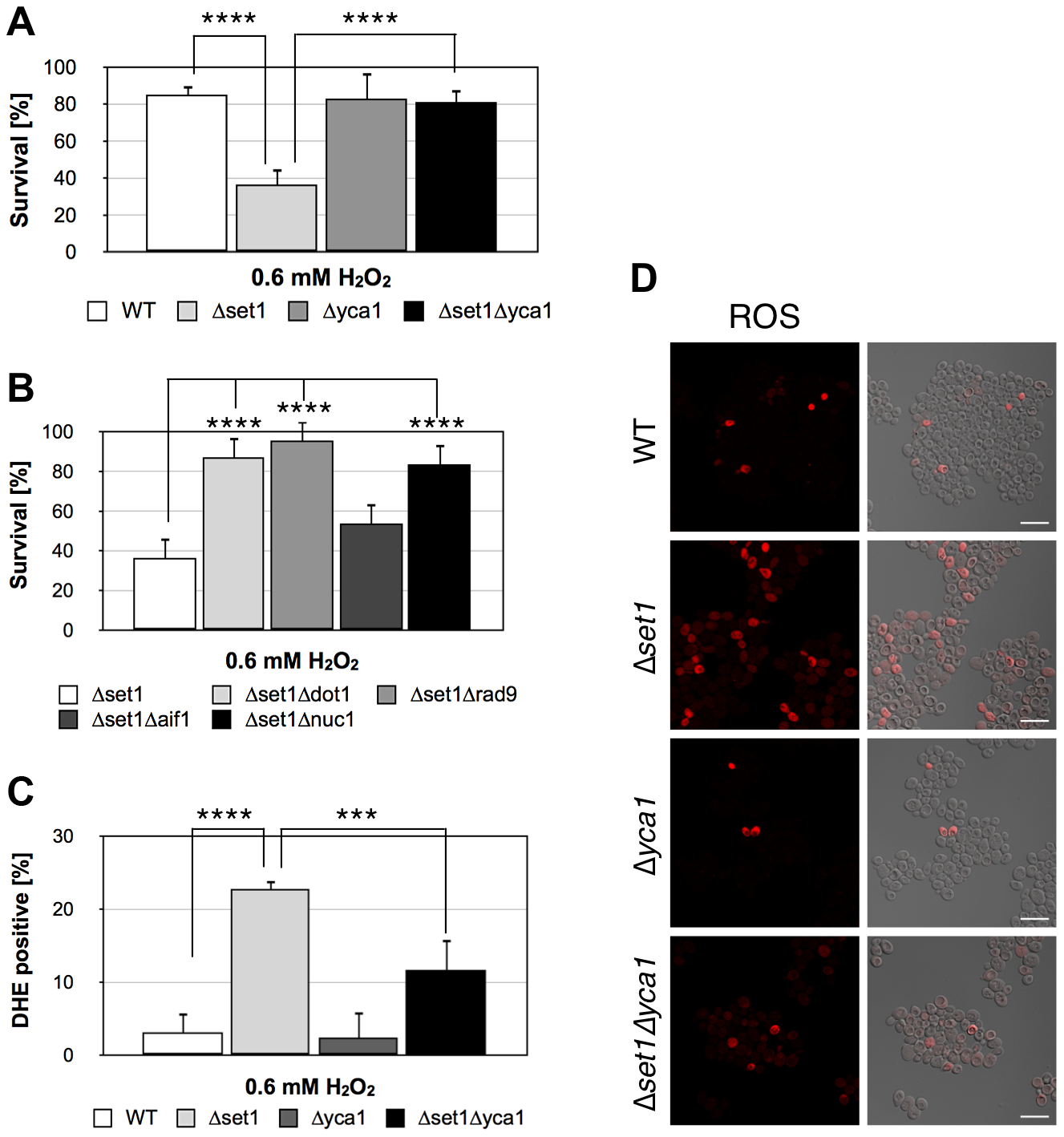 Disruption of H3K4 trimethylation sensitizes yeast to apoptotic stimuli.
