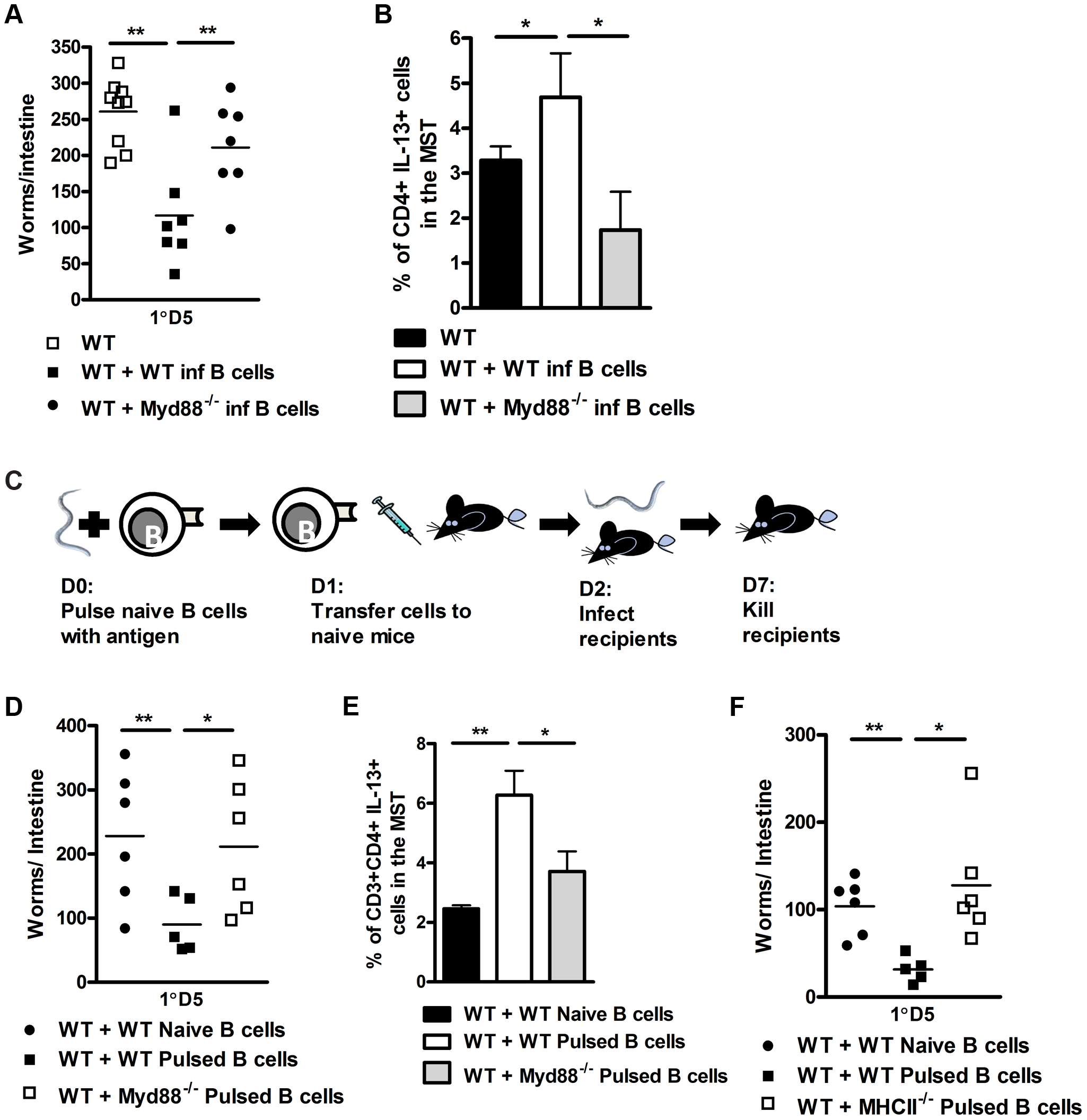 B cell MyD88 expression dependent protection against <i>N. brasiliensis</i> infection.