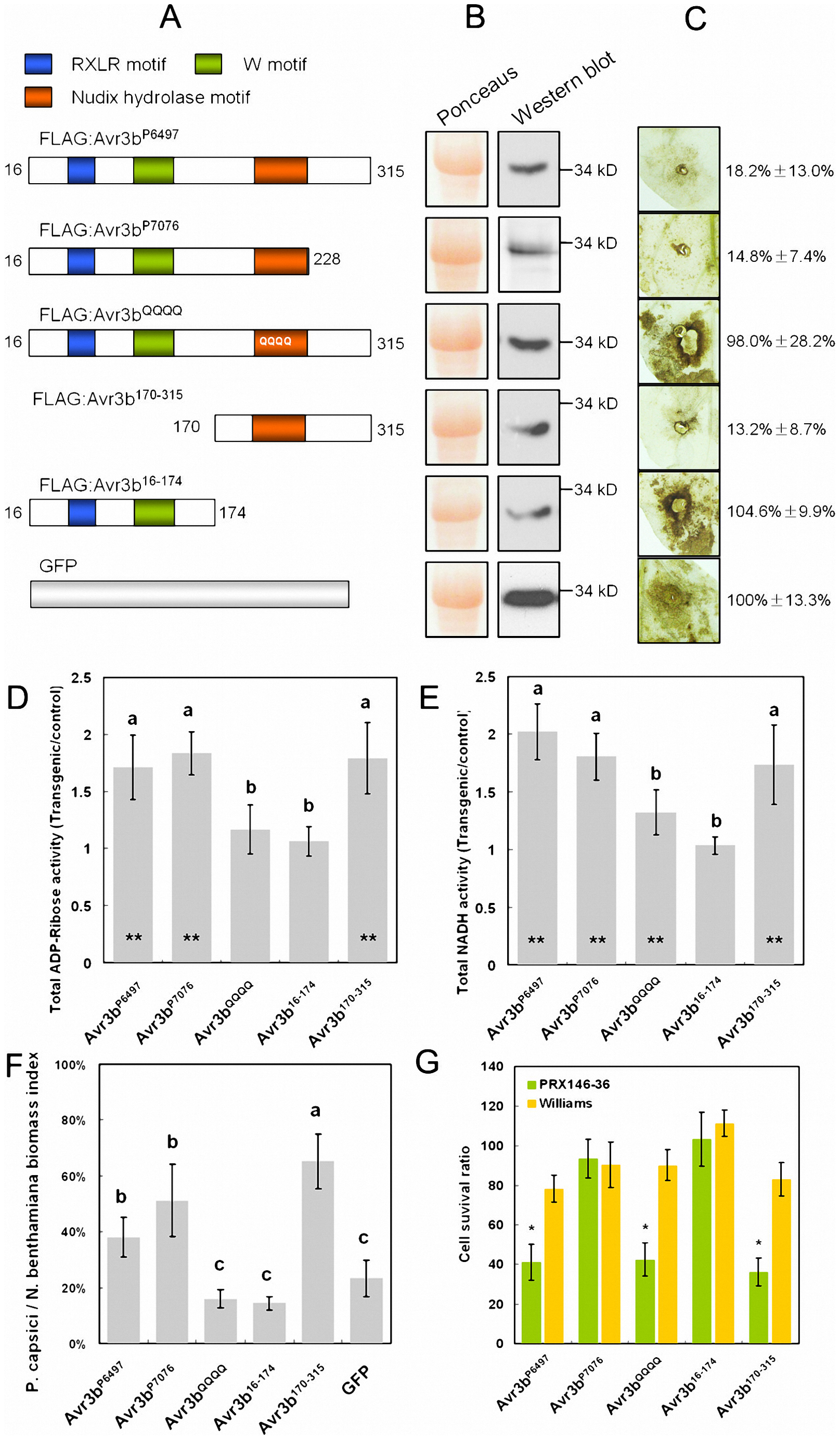 Functional assays of Avr3b alleles and mutants.