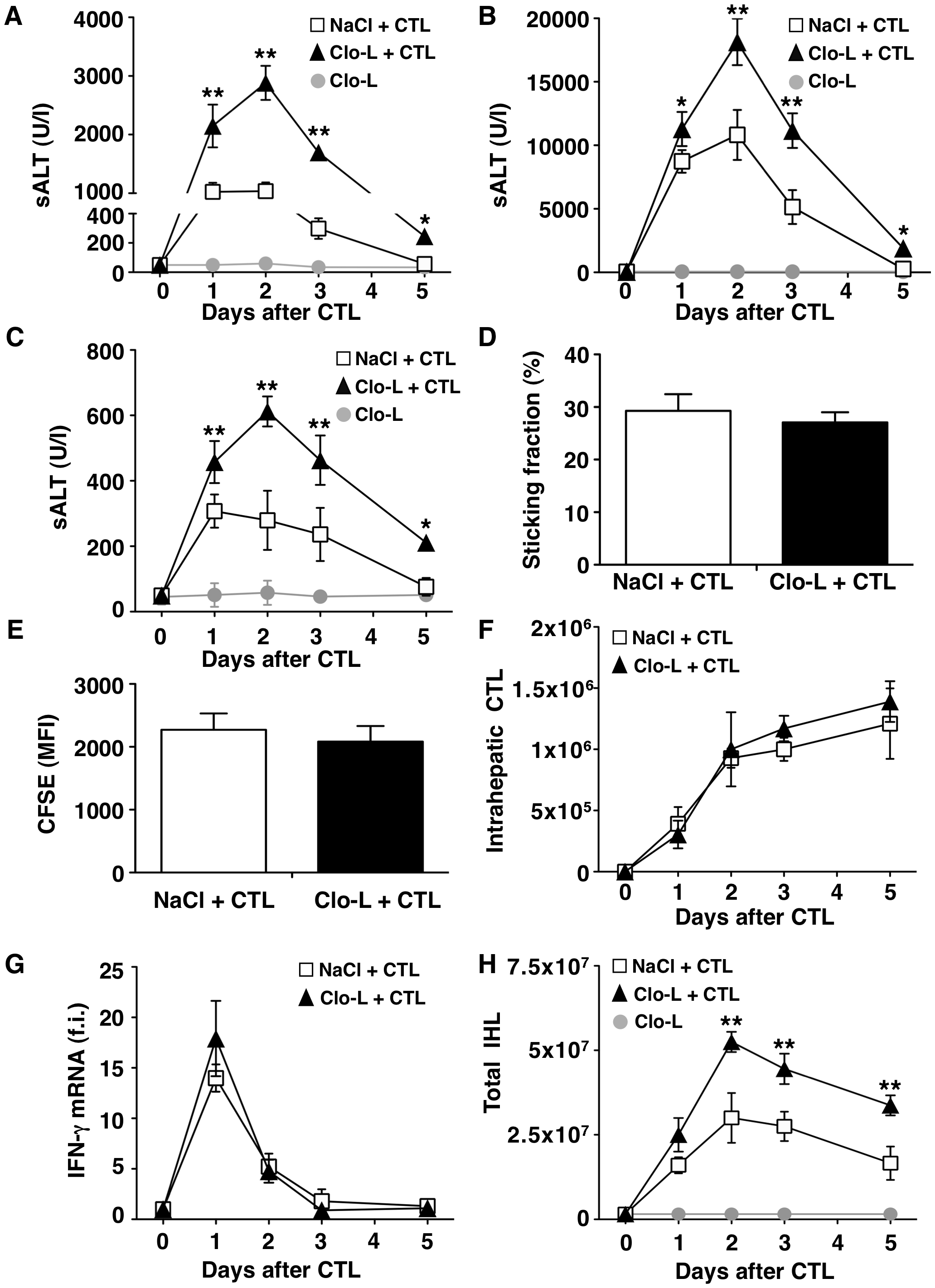KCs limit liver immunopathology in HBV replication-competent transgenic mice, without affecting the number or function of virus-specific effector CD8 T cells (CTL).