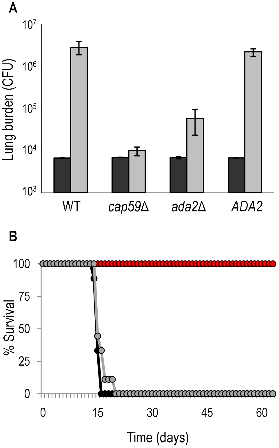Ada2 is required for growth and virulence in mice.