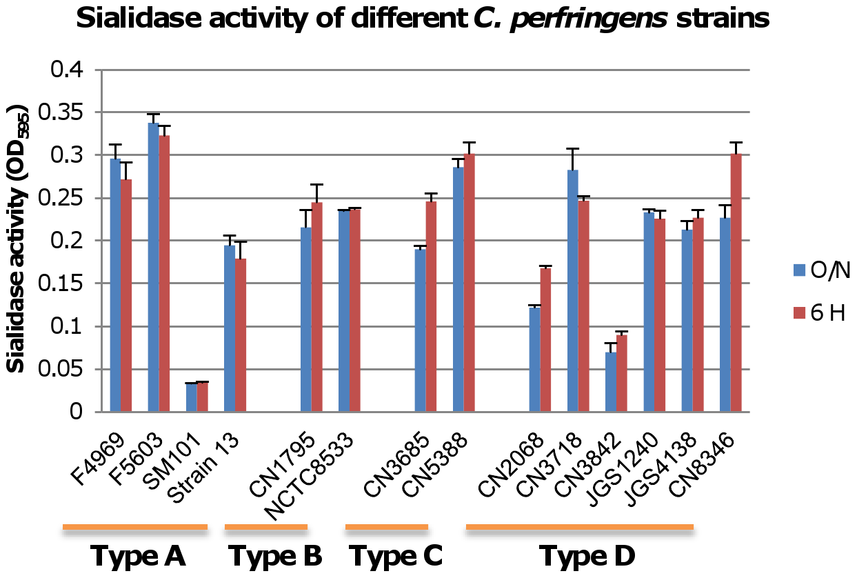 Sialidase activity in different type <i>C. perfringens</i> strains.