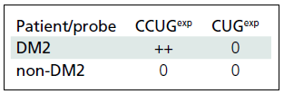 Reaction of lymphocytes with CUG/CCUG probes in DM2 and non-DM2 patients. Positive reactivity with CCUG<sup>exp</sup> probe identified in lymphocytes from DM2 patients only.