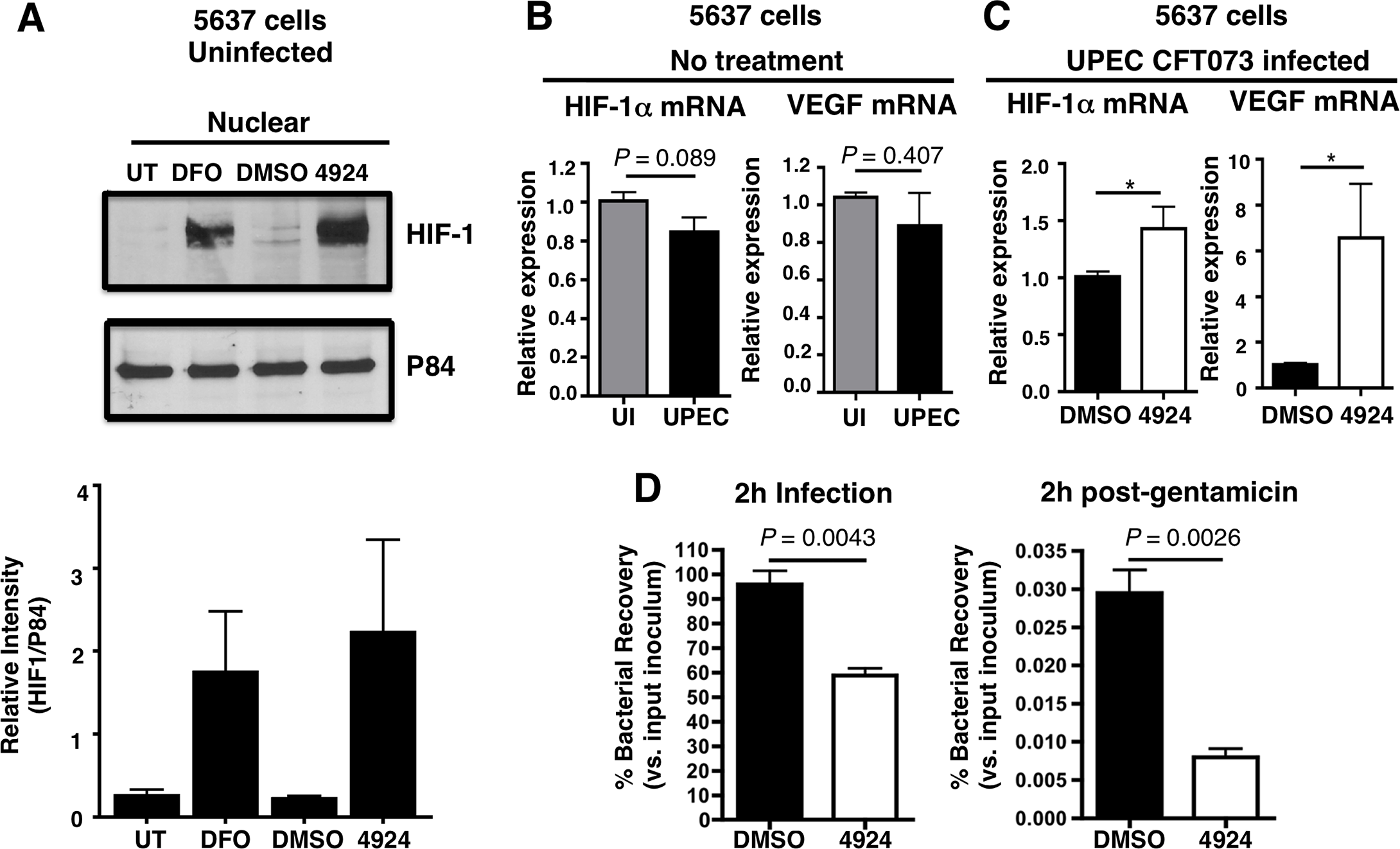AKB-4924 stabilizes HIF-1α protein and reduces UPEC-mediated infection of cultured human uroepithelial cells.