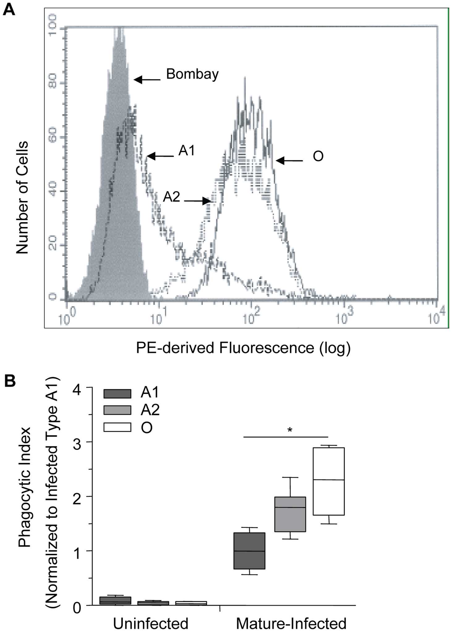 Increasing phagocytosis of erythrocytes correlates with decreasing A antigen.