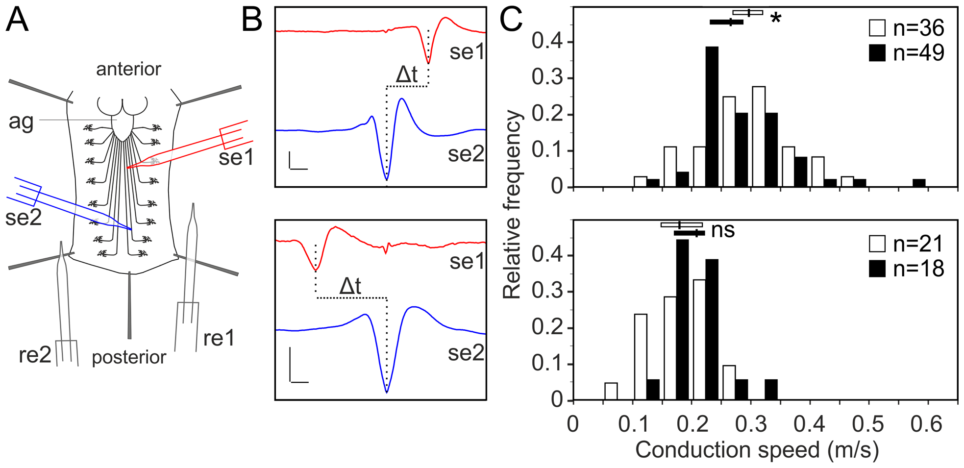 Glial inhibition of <i>lace</i> delays afferent spike propagation.