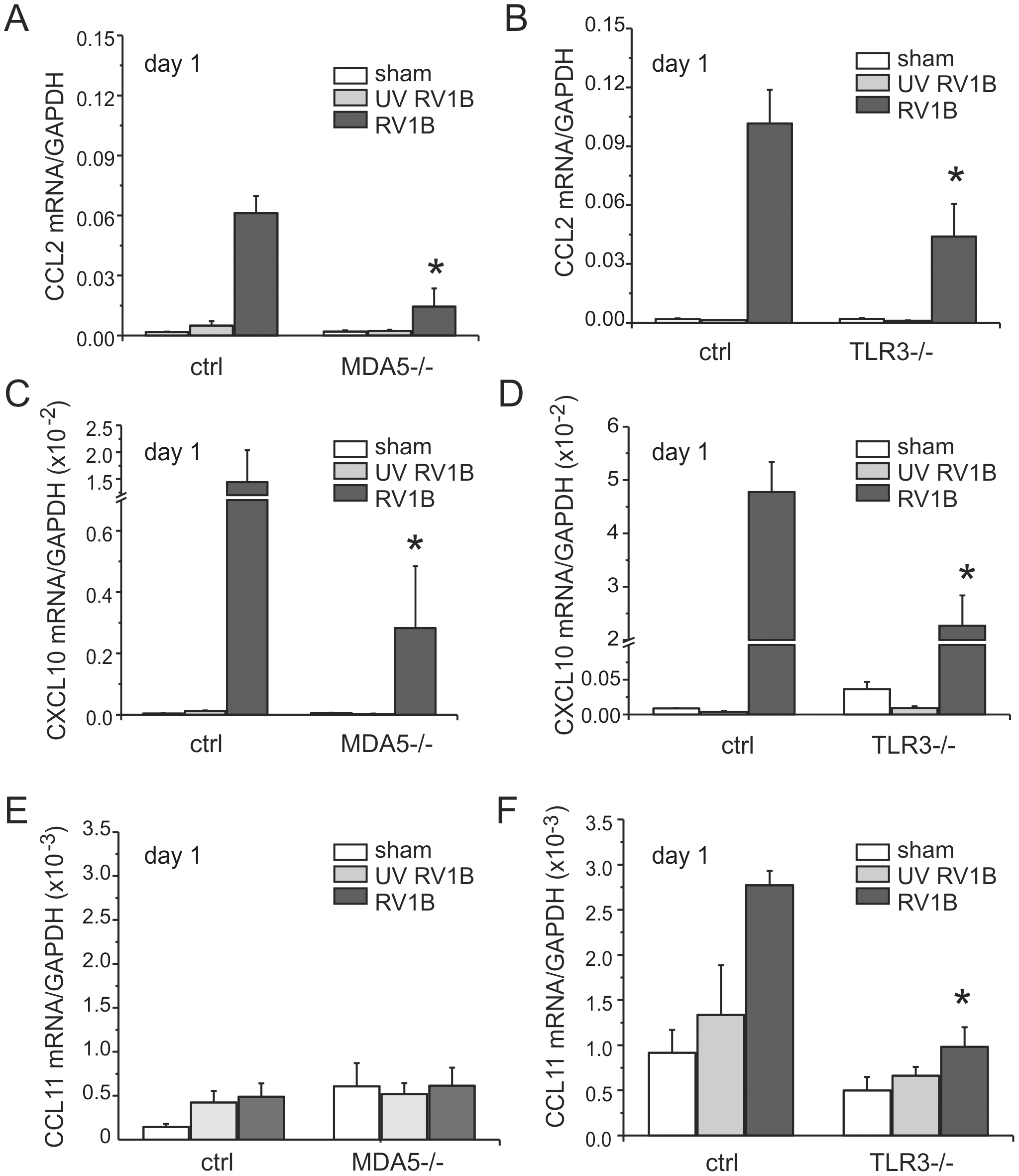 RV1B-induced pro-inflammatory cytokine expression in MDA5−/− and TLR3−/− mice.