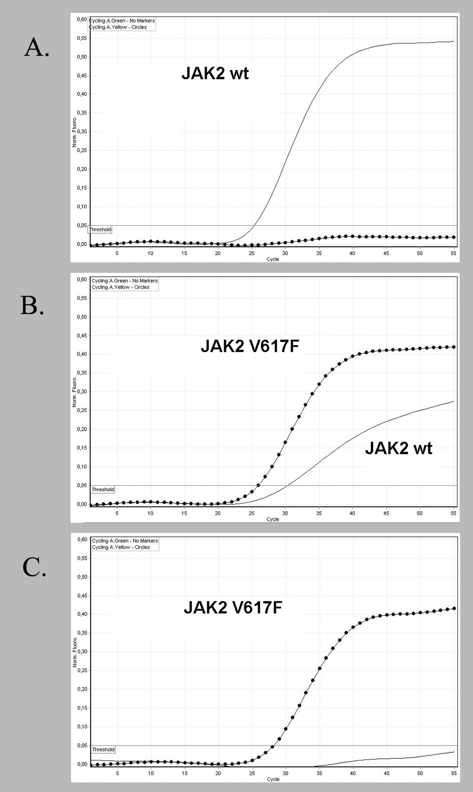 Alelická diskriminace s použitím dvojice hybridizačních LNA -modifikovaných sond. FAM - sonda hybridizuje s normální sekvencí JAK2 genu (plná čára), HEX - sonda hybridizuje s mutovanou sekvencí JAK2<sup>V617F</sup> (tečkovaná čára). Vzorek DNA V617F negativního pacienta obsahující pouze normální sekvenci JAK2 vykazuje signál jen FAM - sondy (A). U pacienta B je zachycen signál obou sond a u DNA pacienta C je detekován signál jen s HEX - sondou.