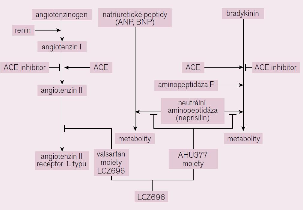 Schéma působení LCZ 696 [6].