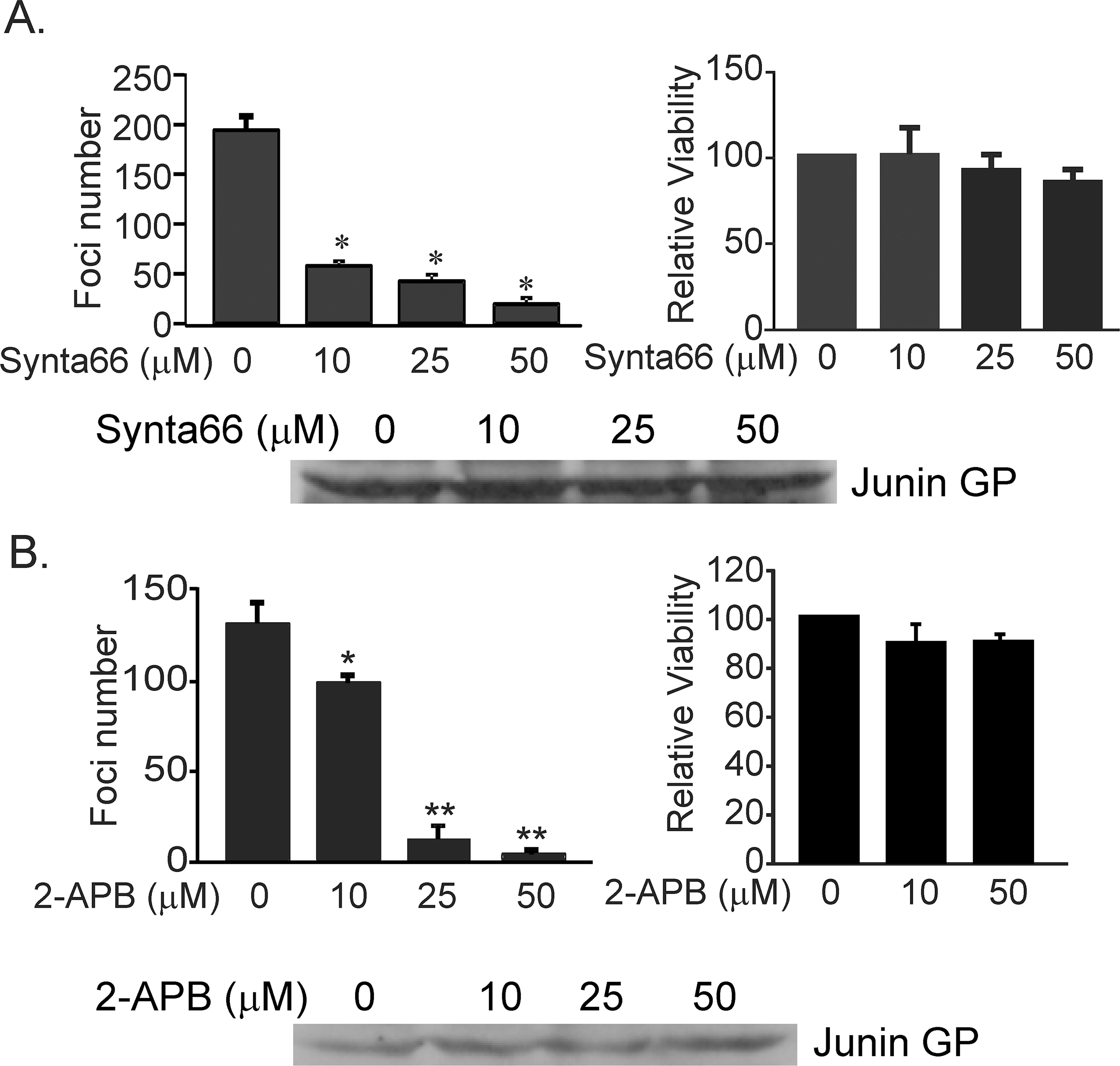 Synta66 and 2-APB inhibit egress of live JUNV (Candid-1 strain) from VeroE6 cells.