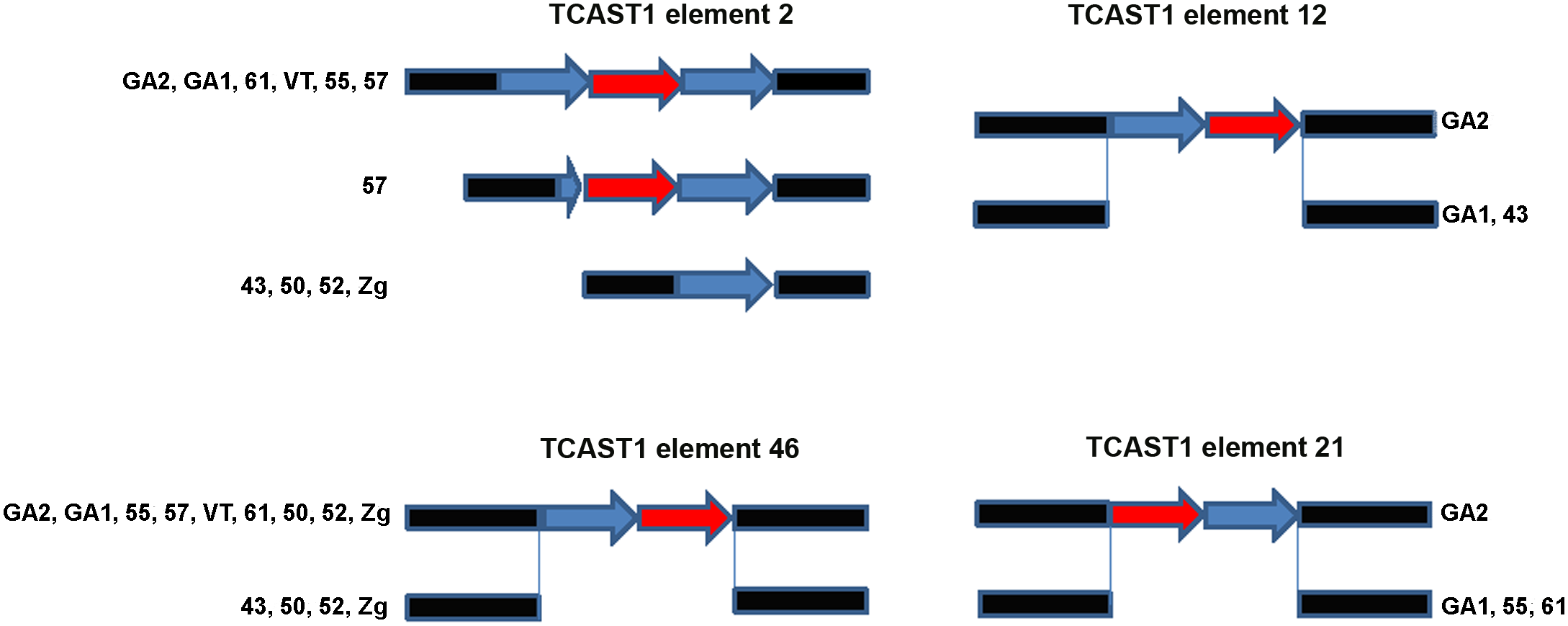 Schematic representation of dispersed TCAST1 elements 2, 12, 46 and 21 in <i>T</i>. <i>castaneum</i> strains.