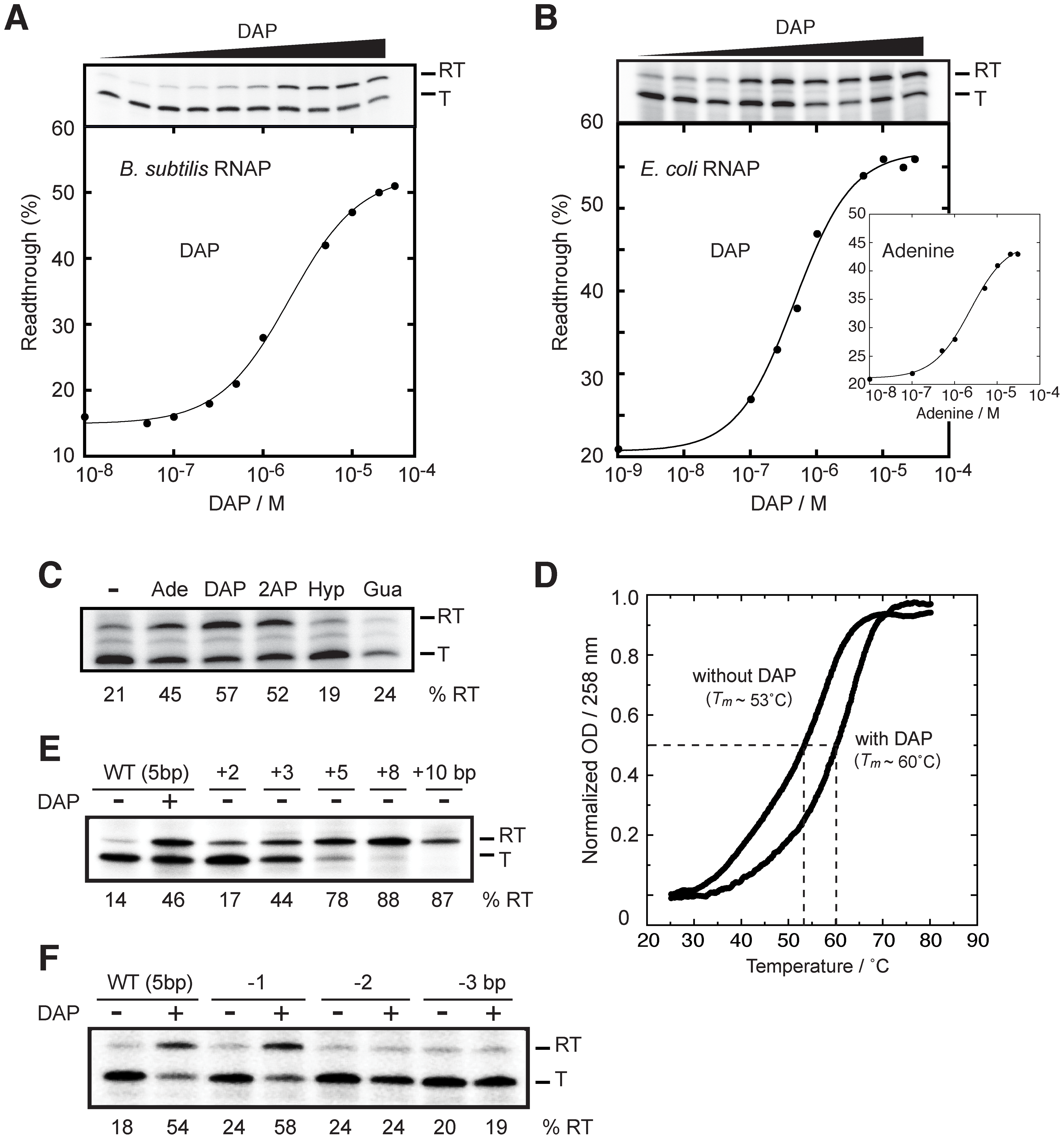 The <i>pbuE</i> riboswitch requires a transcriptional context to bind adenine.