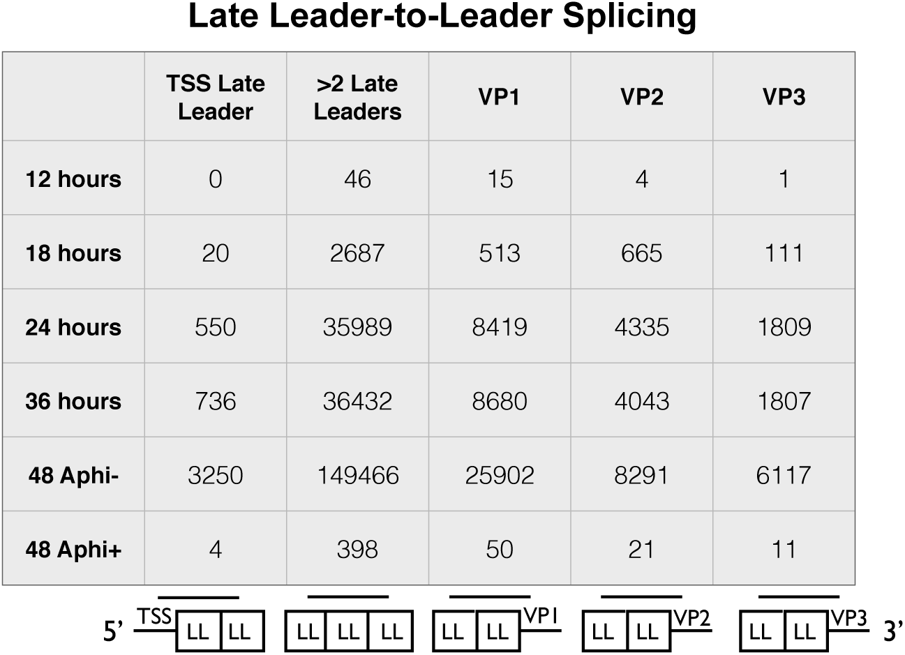 Alignment of reads from late leader repeats.