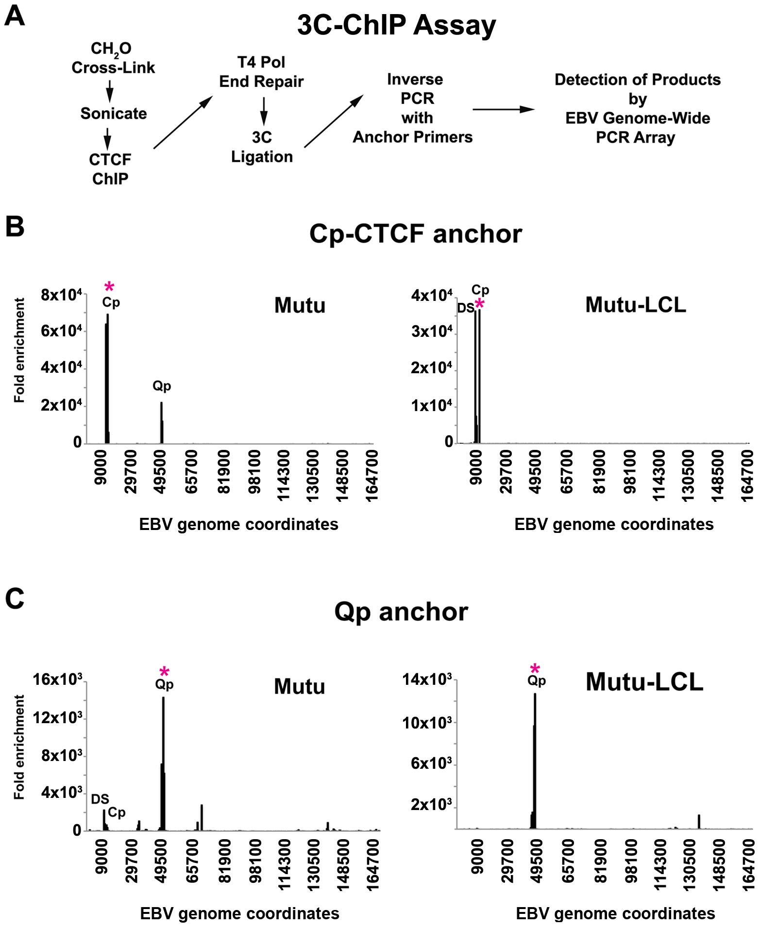 Chromosome Conformation Capture Chromatin Immunoprecipitation (3C-ChIP) analysis shows that CTCF is involved in chromatin looping in EBV.