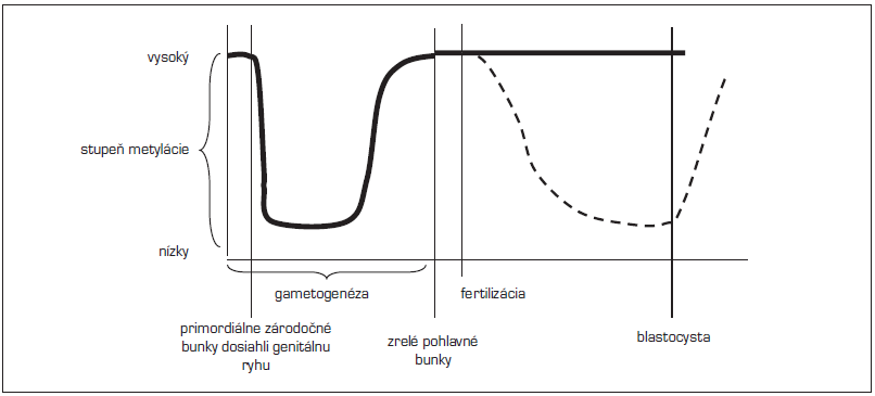 Načasovanie epigenetických znakov (upravené podľa Lucifero, 2004). <em>(Po obdobie fertilizácie sa metylujú imprintované gény i ostatný genóm približne rovnako, po fertilizácii zostávajú imprintované gény chránené od demetylácie – hrubá čiara, kým ostatný genóm sa demetyluje a znovu metyluje – prerušovaná čiara)</em>