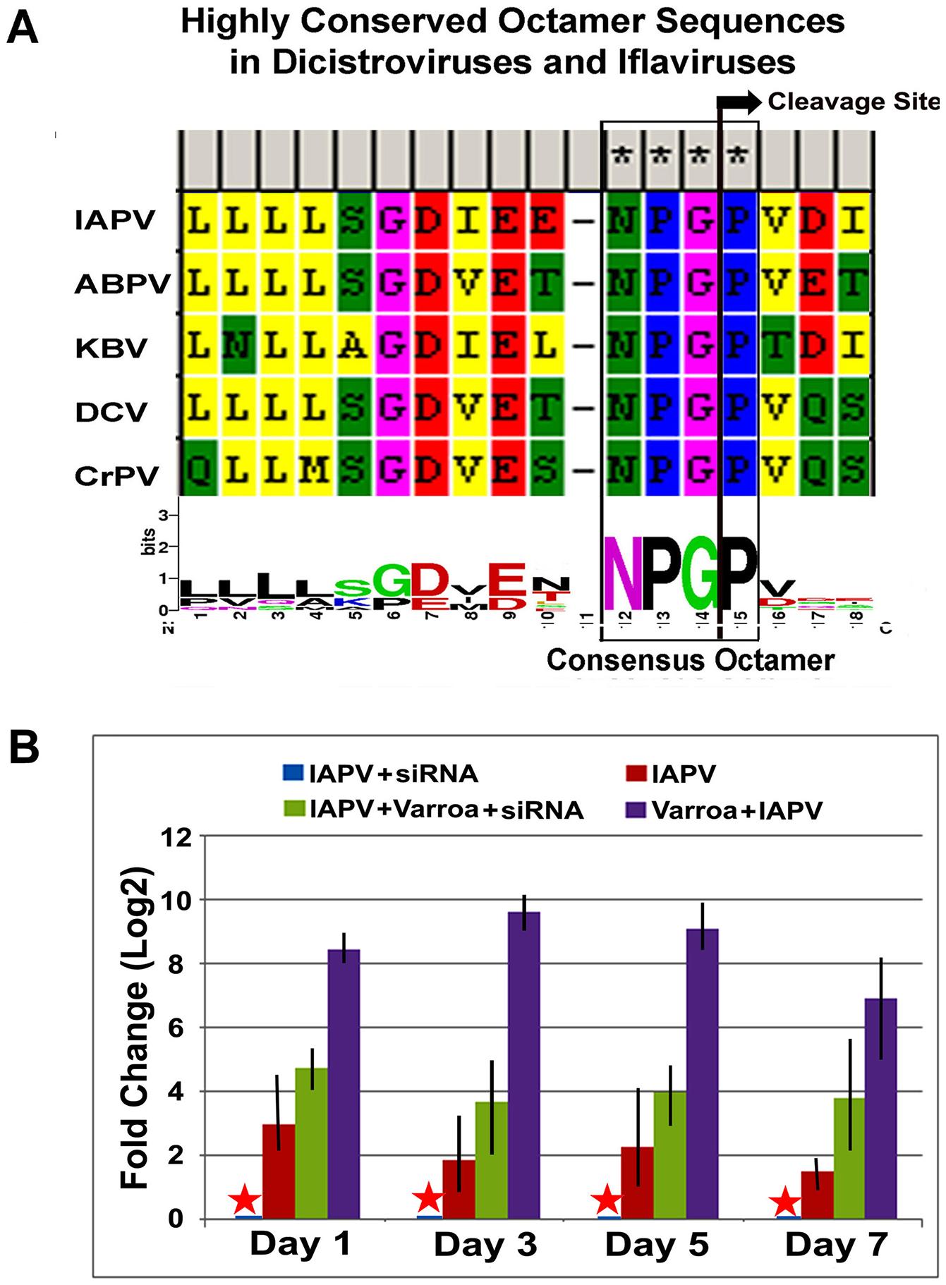 IAPV-encoded putative suppressor of RNAi.