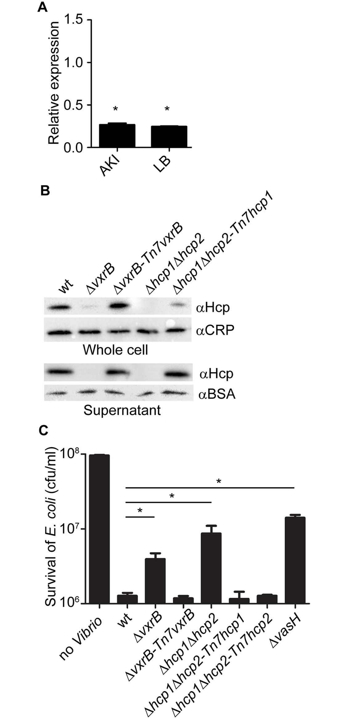 Analysis of Hcp production and secretion in the <i>vxrB</i> mutant.