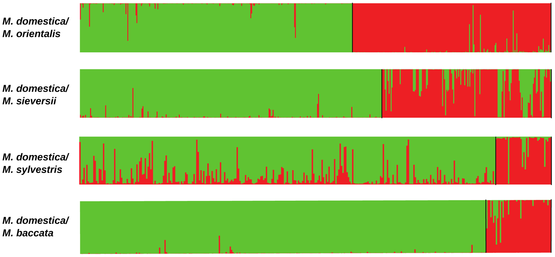 Proportions of ancestry in two ancestral genepools inferred with the STRUCTURE program, based on datasets including <i>M. domestica</i> (green, <i>N</i>=299) and each of the four wild <i>Malus</i> species (red).