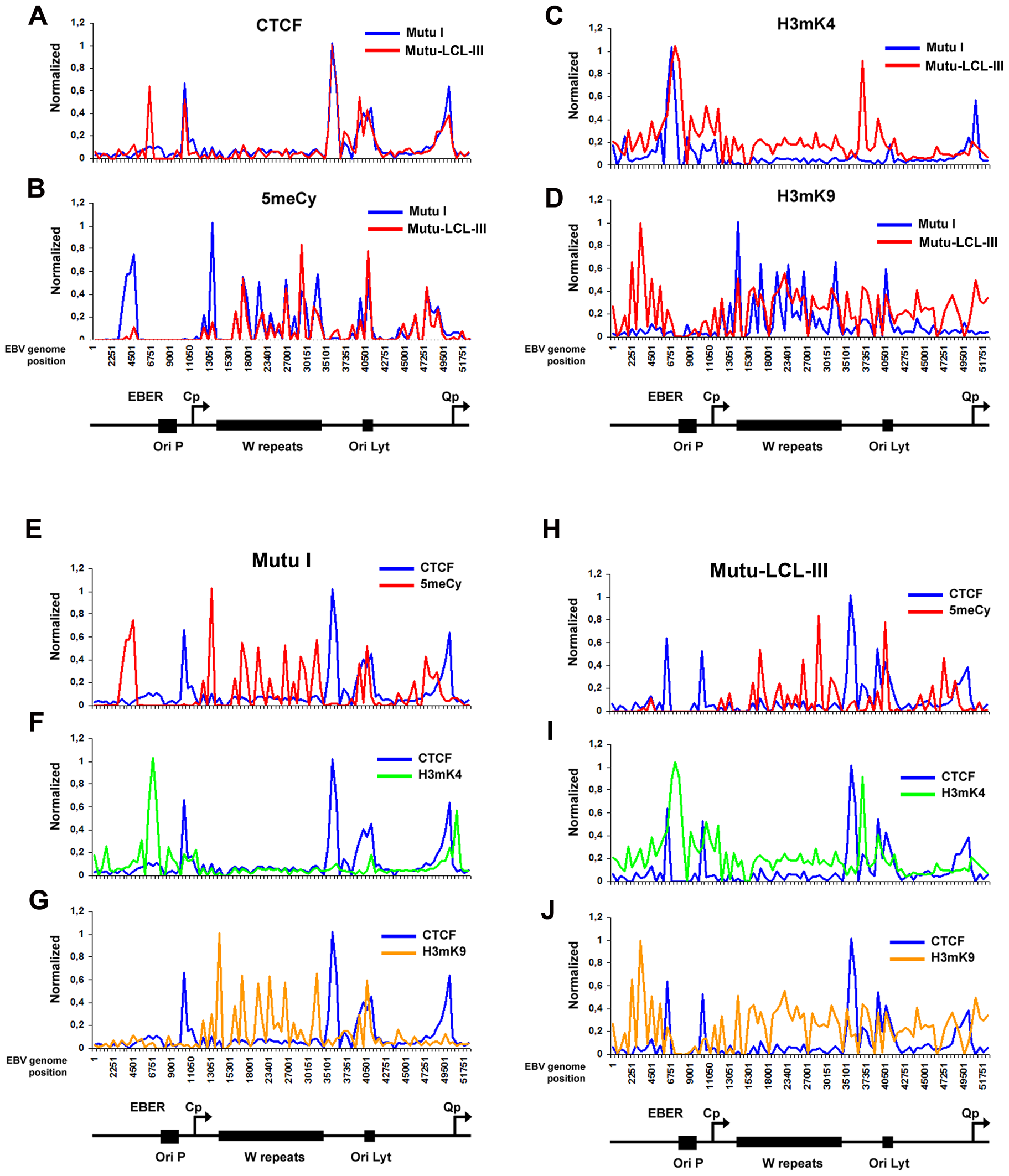 Analysis of epigenetic patterns in the EBV latency control region.