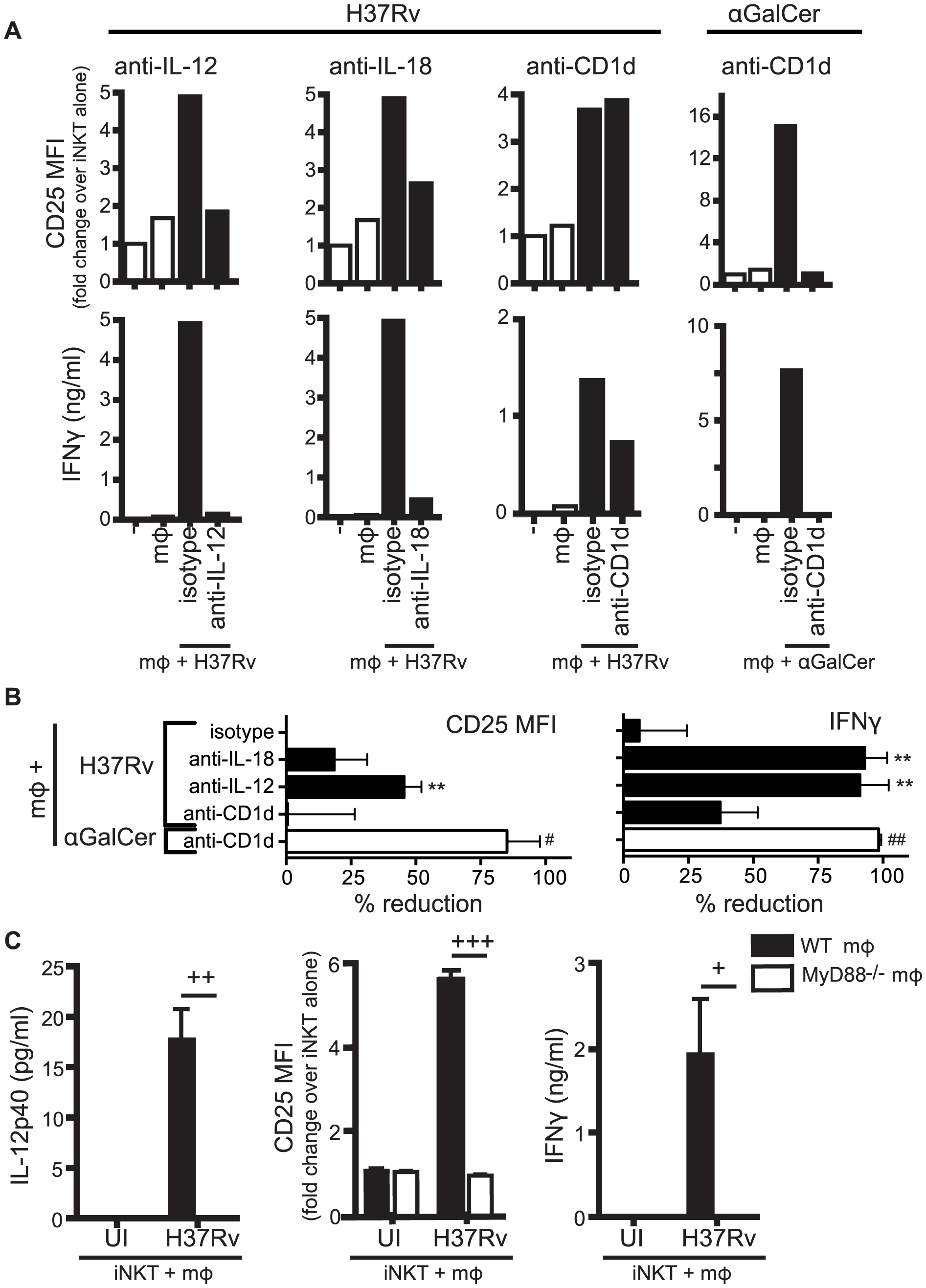 Production of IL-12 and IL-18 by Mtb-infected mϕ induce traditional markers of iNKT cell activation.