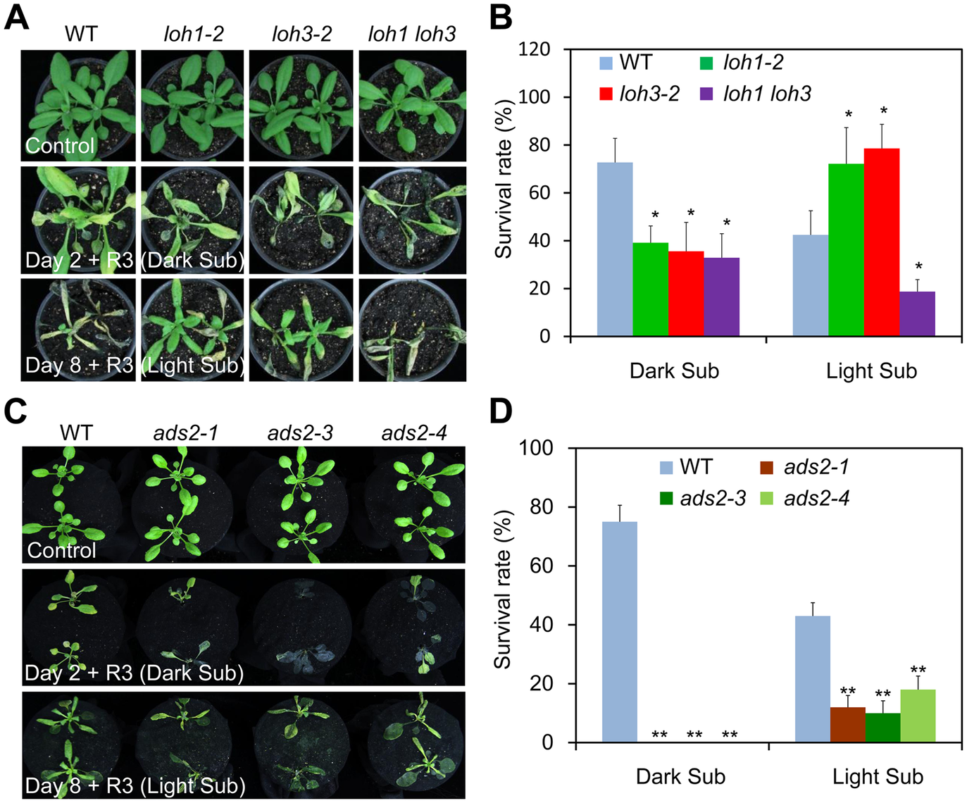 The <i>loh1 loh3</i> knockdown double mutant and <i>ads2</i> mutants displayed attenuated tolerance to both dark and light submergence.