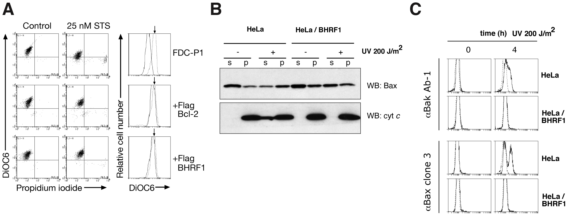 BHRF1 inhibits loss of mitochondrial transmembrane potential and Bax/Bak activation.