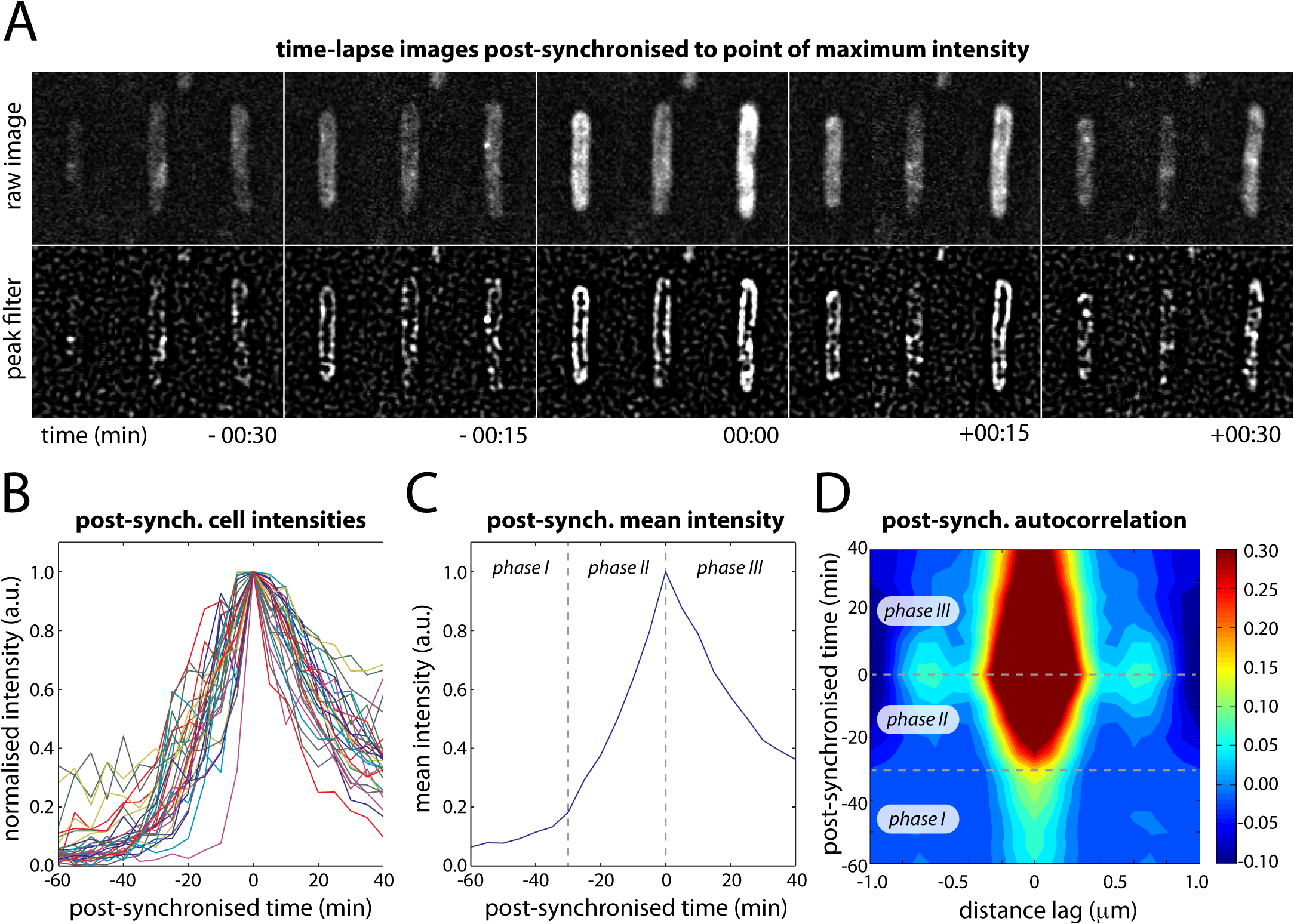 Post-synchronization of individual cells within time-lapse series (EAW282).