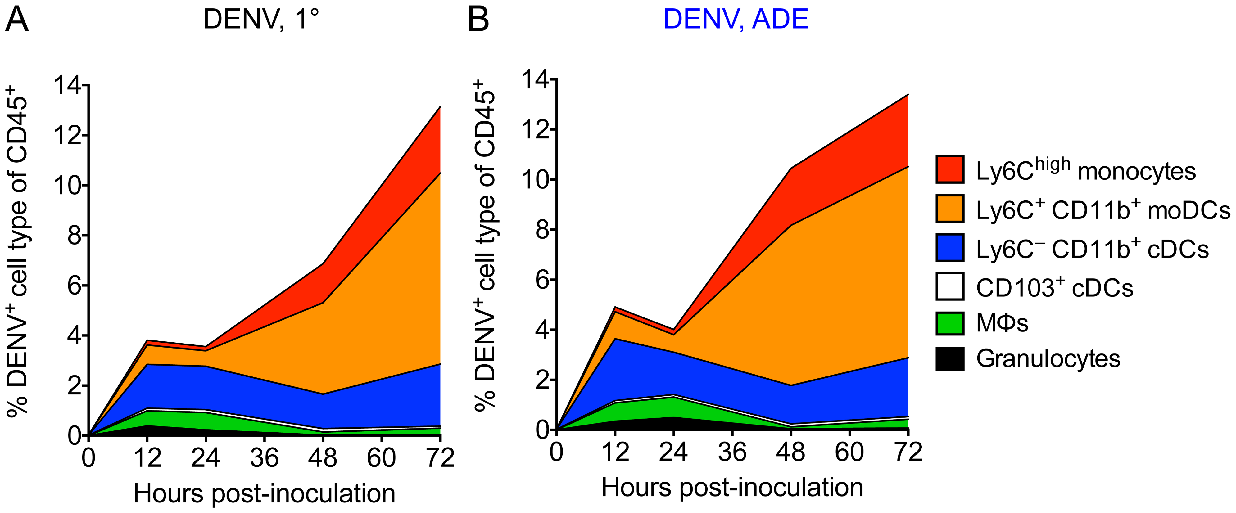 The main targets for DENV infection in the dermis over time.