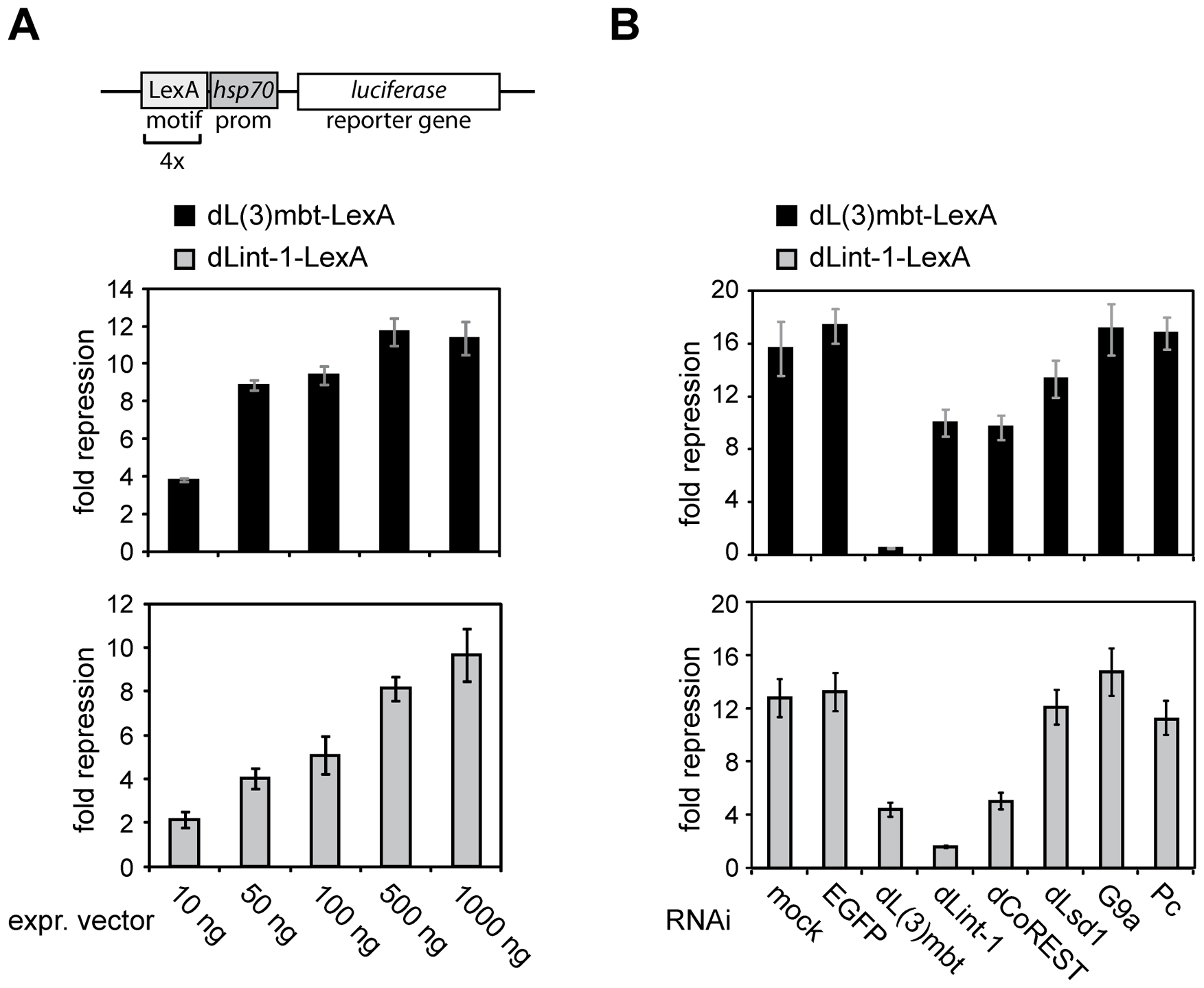 Promoter recruitment of LINT subunits results in transcriptional repression.
