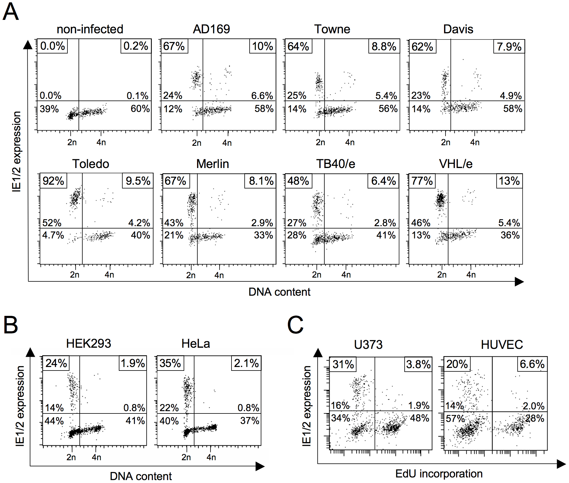 Block of HCMV major immediate early (MIE) gene expression in S/G2 is neither virus strain nor cell type-dependent.