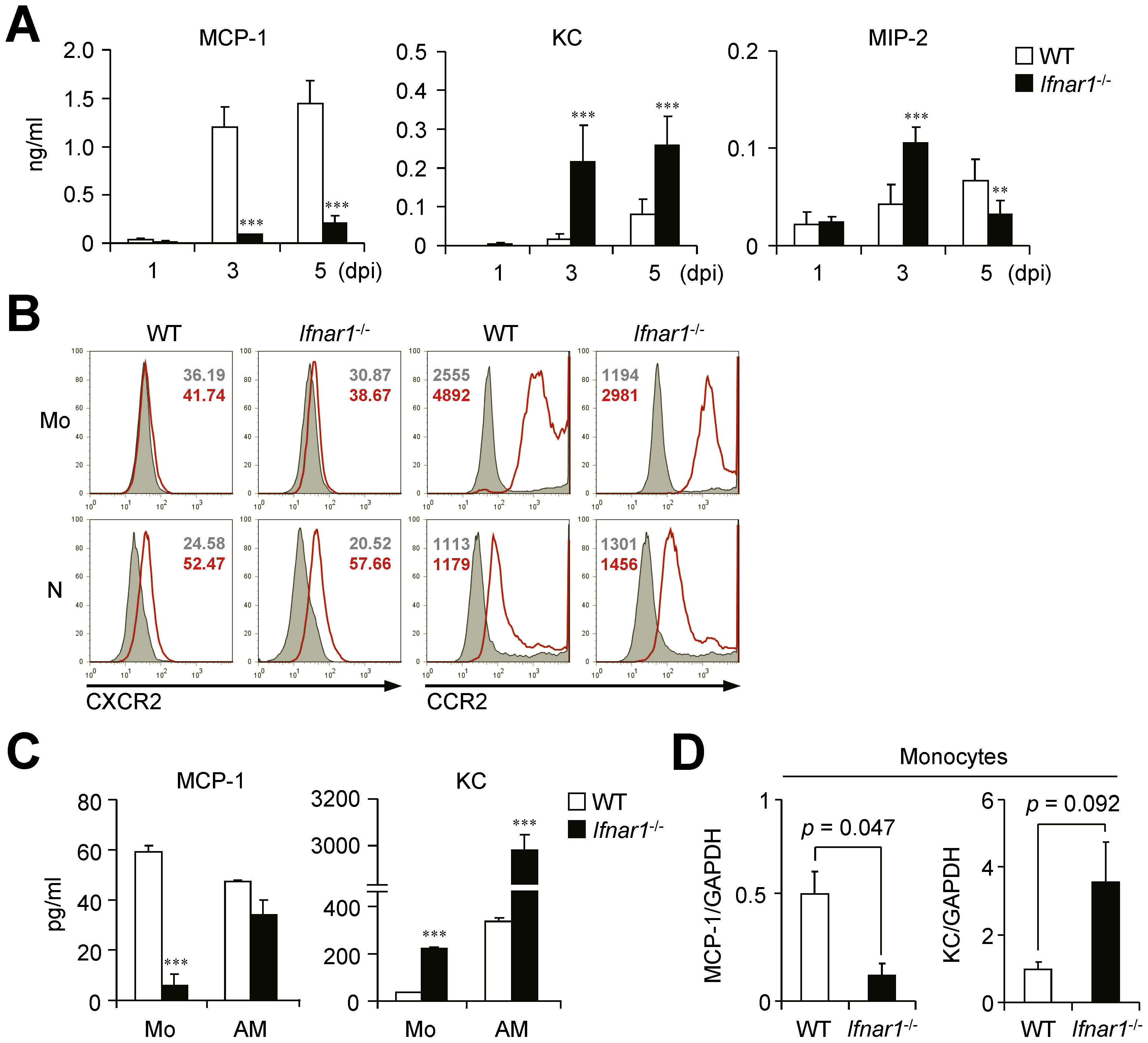 <i>Ifnar1</i><sup>−/−</sup> mice produce significantly lower MCP-1 and higher KC than WT mice.