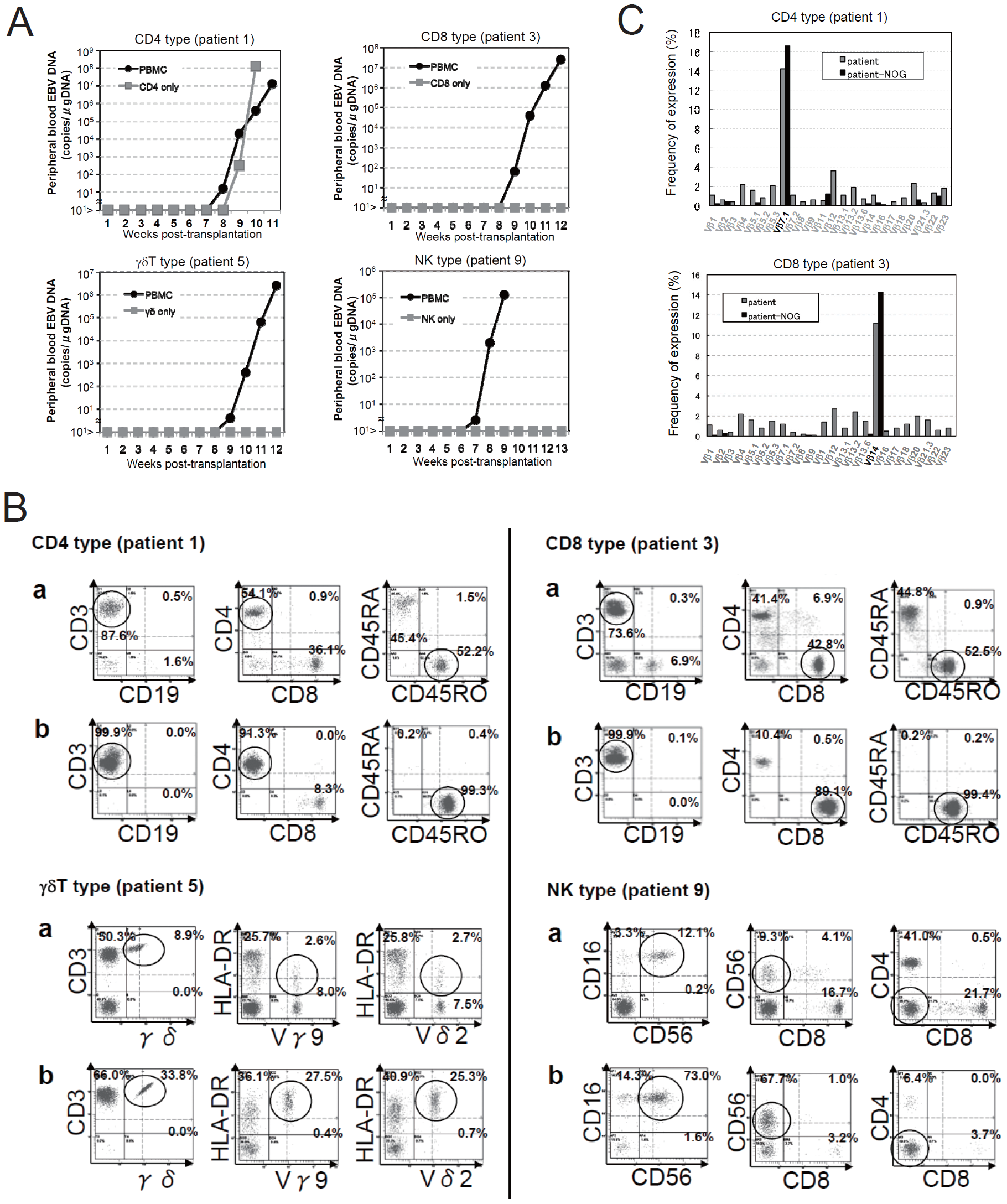 Engraftment of EBV-infected T or NK cells in NOG mice following transplantation with PBMC of patients with CAEBV.