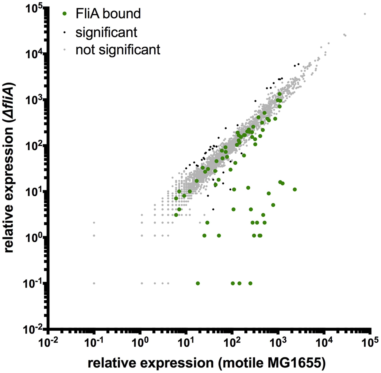 Genome-wide FliA-dependent gene expression.