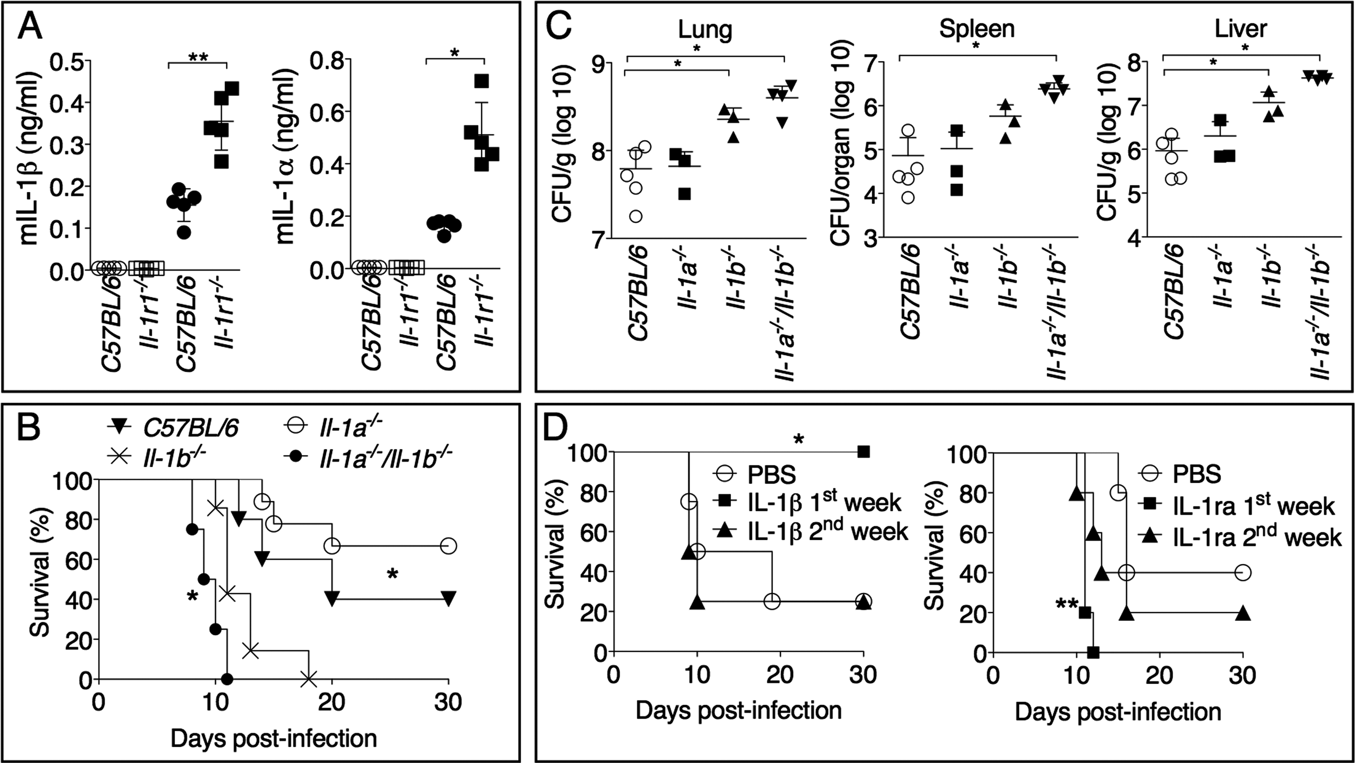 IL-1β, not IL-1α, is protective and acts in the early phase of <i>Ft</i> LVS intranasal infection.