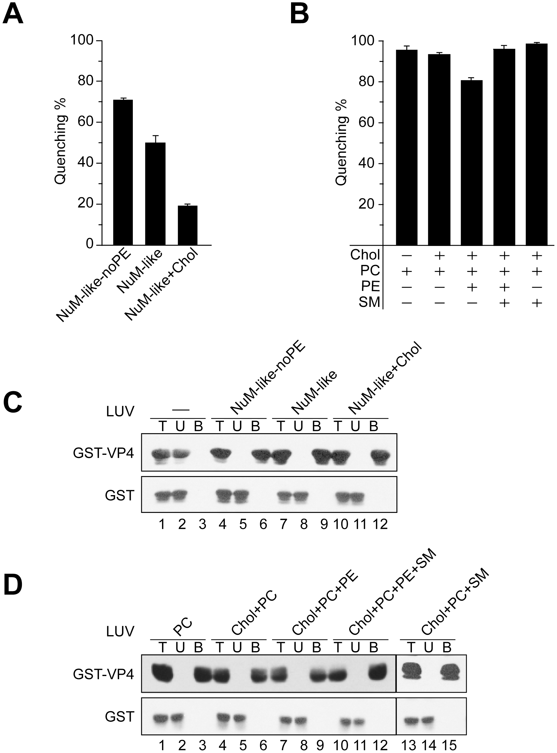 Activity of VP4 is dependent upon the lipid composition of the membranes.