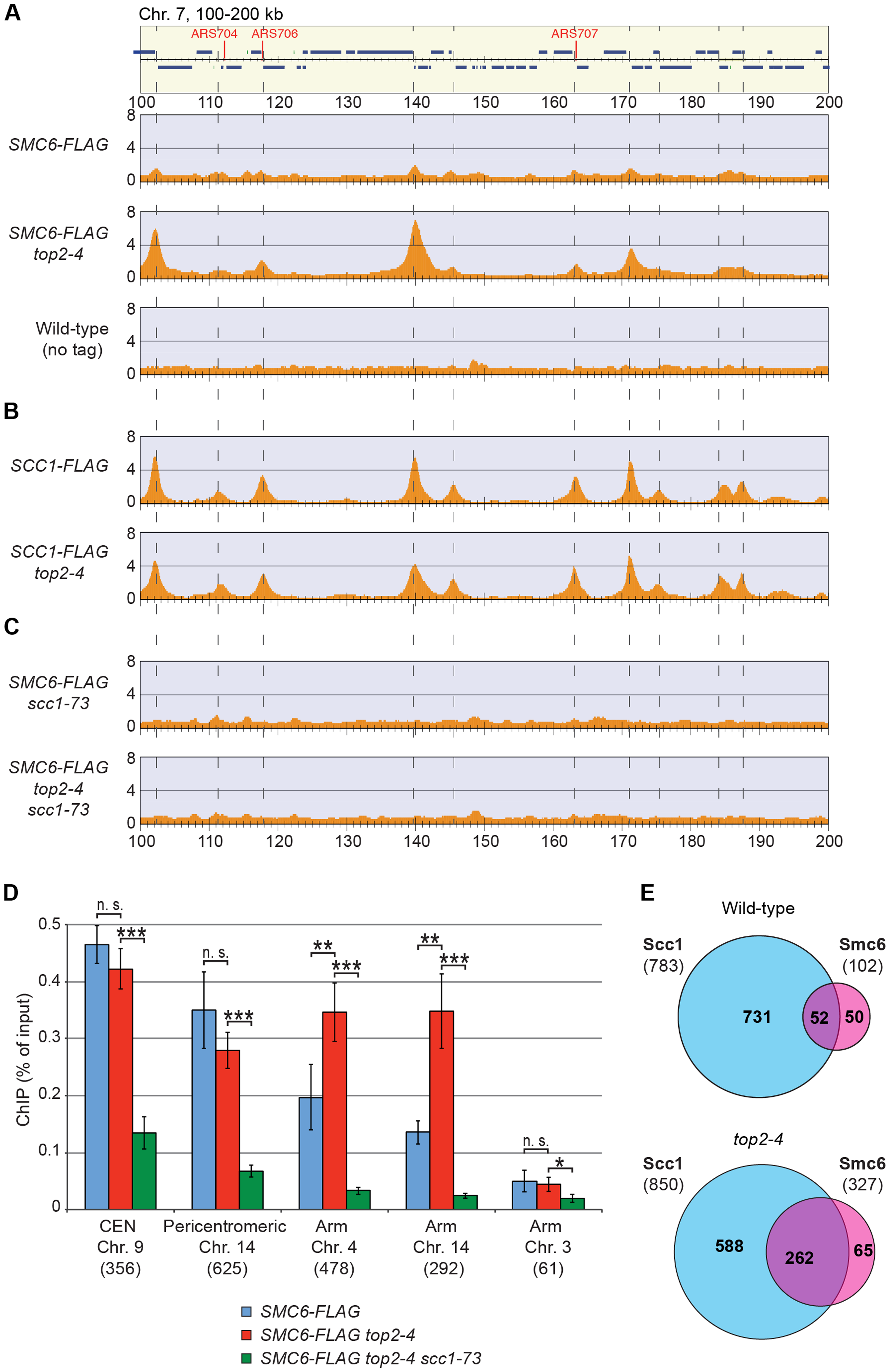 Smc5/6 accumulates on chromosomes after Top2 inhibition, and co-localizes with cohesin in both wild-type and <i>top2-4</i> cells.