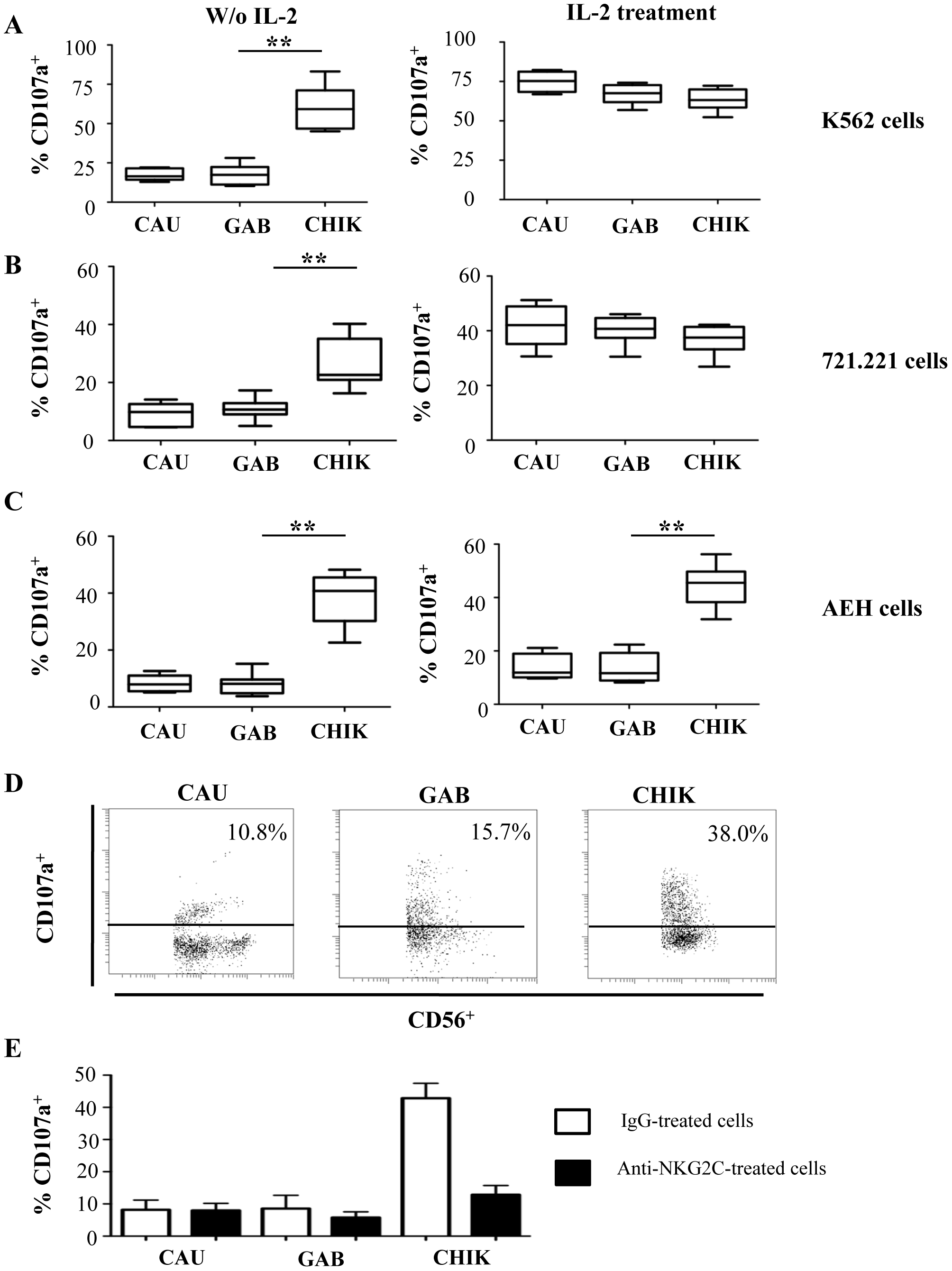 Robust degranulation efficacy of NK cells from CHIKV-infected patients against HLA-E<sup>+</sup> target cells.