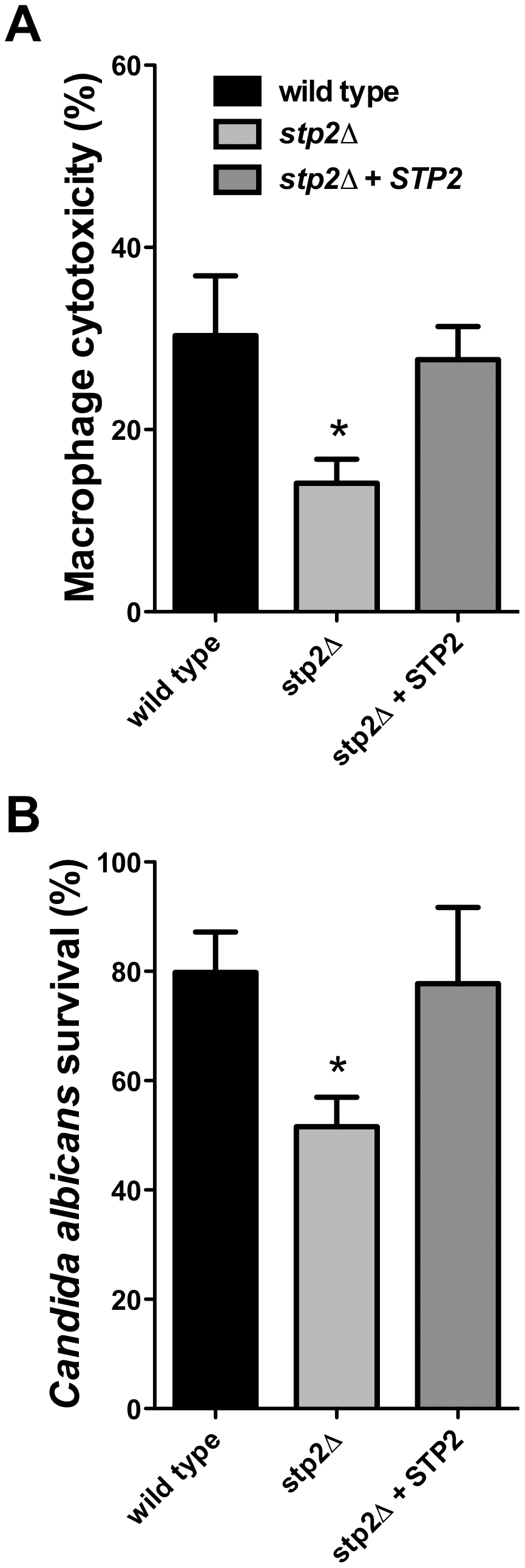 Cells lacking <i>STP2</i> show reduced survival during phagocytosis and reduced capacity to kill RAW264.7 macrophages.