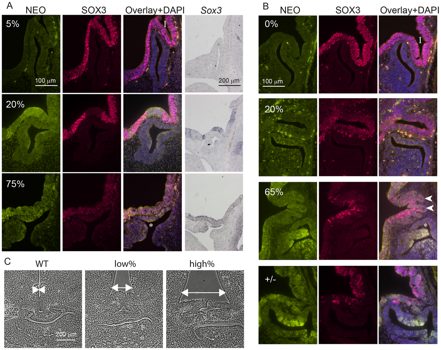 <i>Sox3</i>-26ala cells cause pituitary defects indistinguishable from <i>Sox3</i>-null cells.