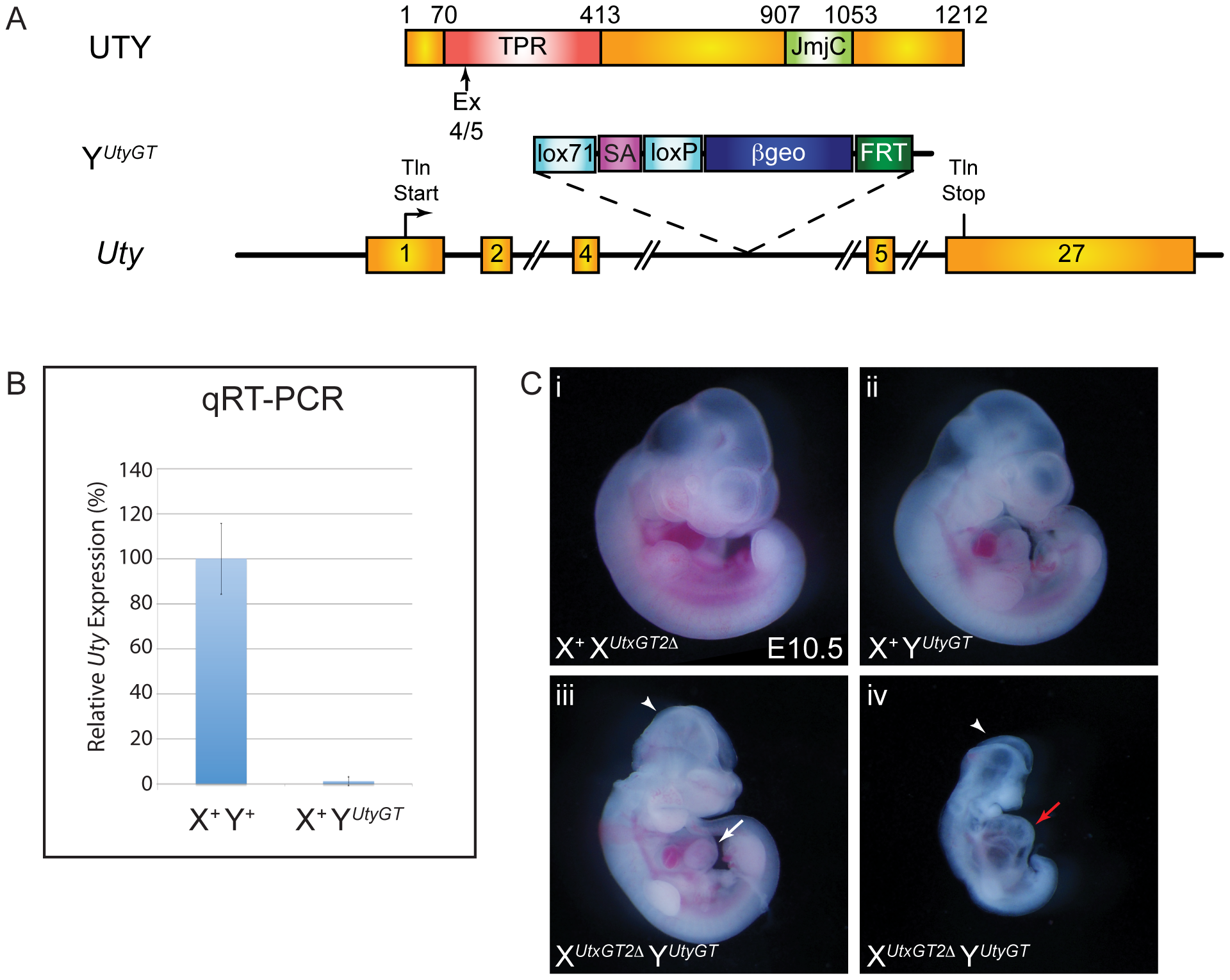 UTX and UTY have essential, redundant functions in embryonic development.