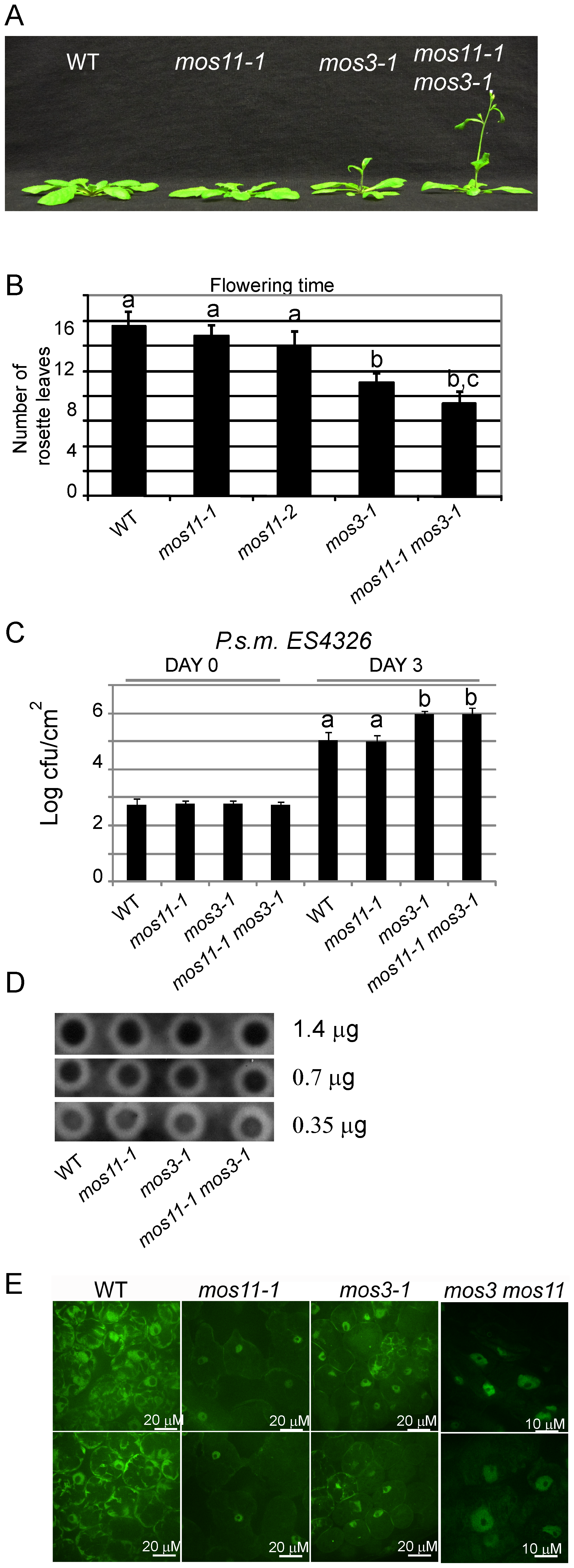 <i>mos11-1 mos3-1</i> double mutant is impaired in flowering time, basal defense, and mRNA export.
