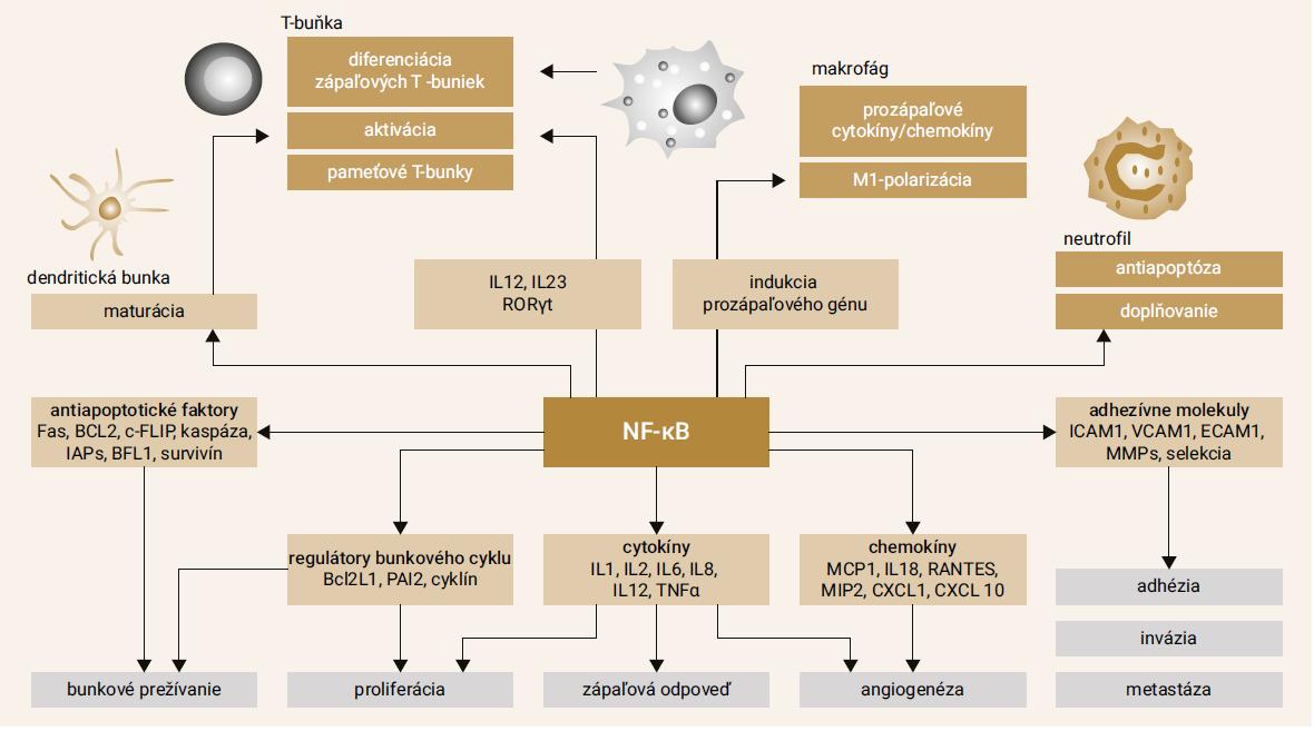 Schéma. Náčrt funkcií NF-κB v patogenéze RA. Upravené podľa [6]