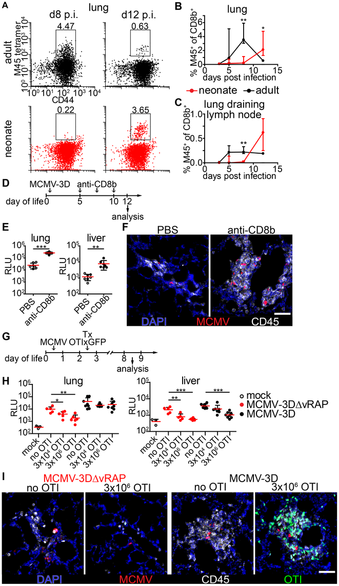 Delayed expansion of MCMV-specific T cells contributes to susceptibility of neonates.
