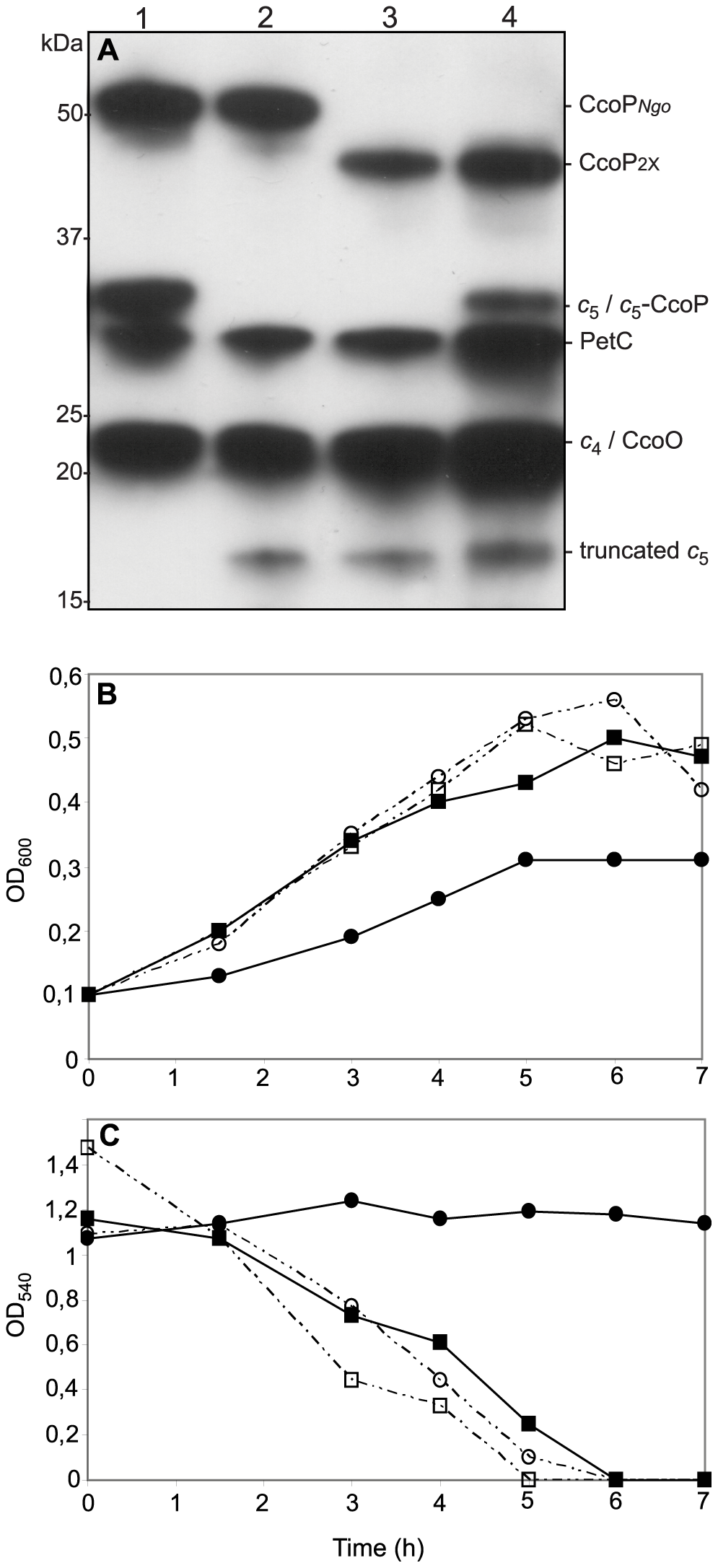 Ectopic expression of a <i>c</i><sub>5</sub>-CcoP hybrid protein complements a defect in nitrite-dependent, microaerobic growth in <i>N. gonorrhoeae</i>.