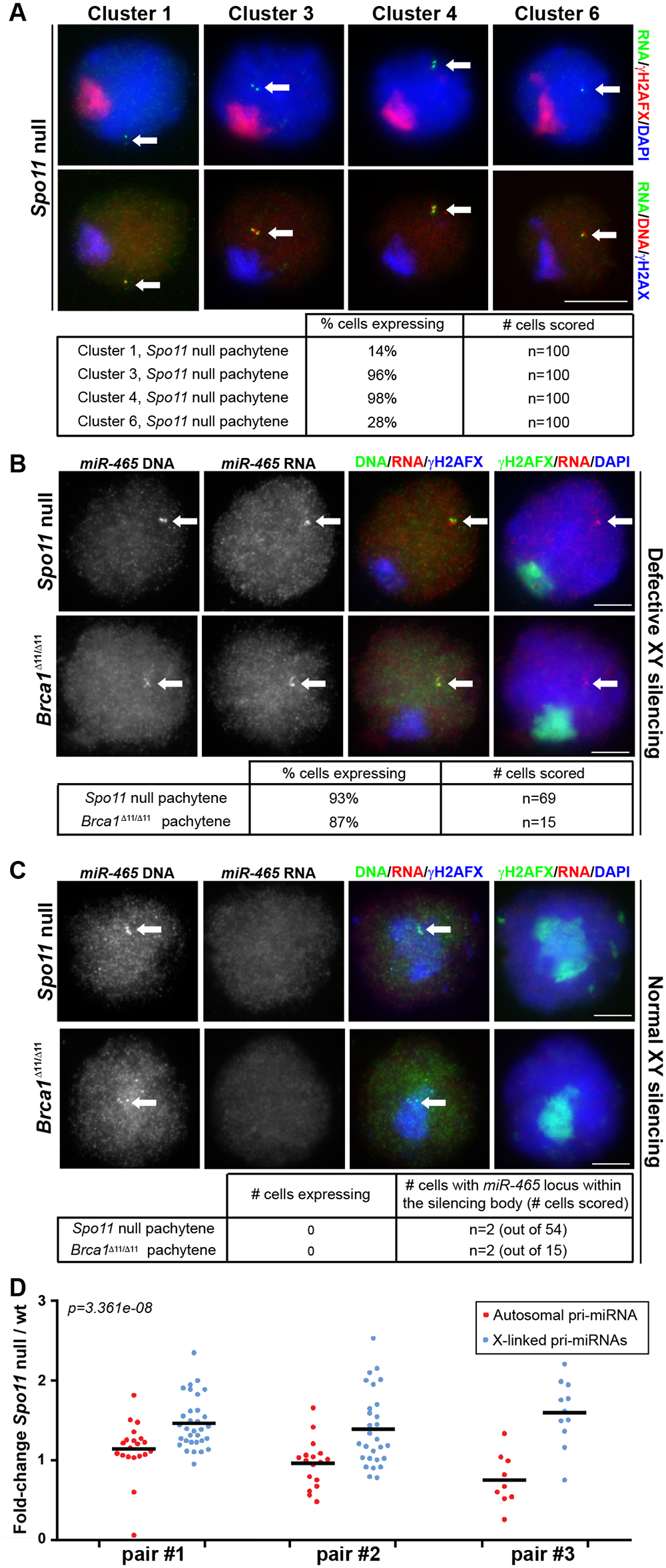 Pachytene silencing of X-linked miRNAs is due to MSCI.