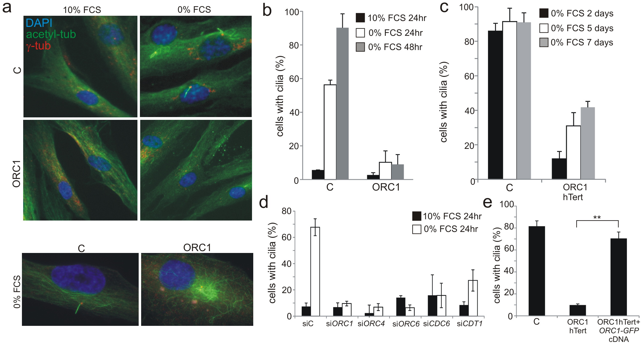 Deficiency in origin licensing proteins dramatically impairs cilia formation.