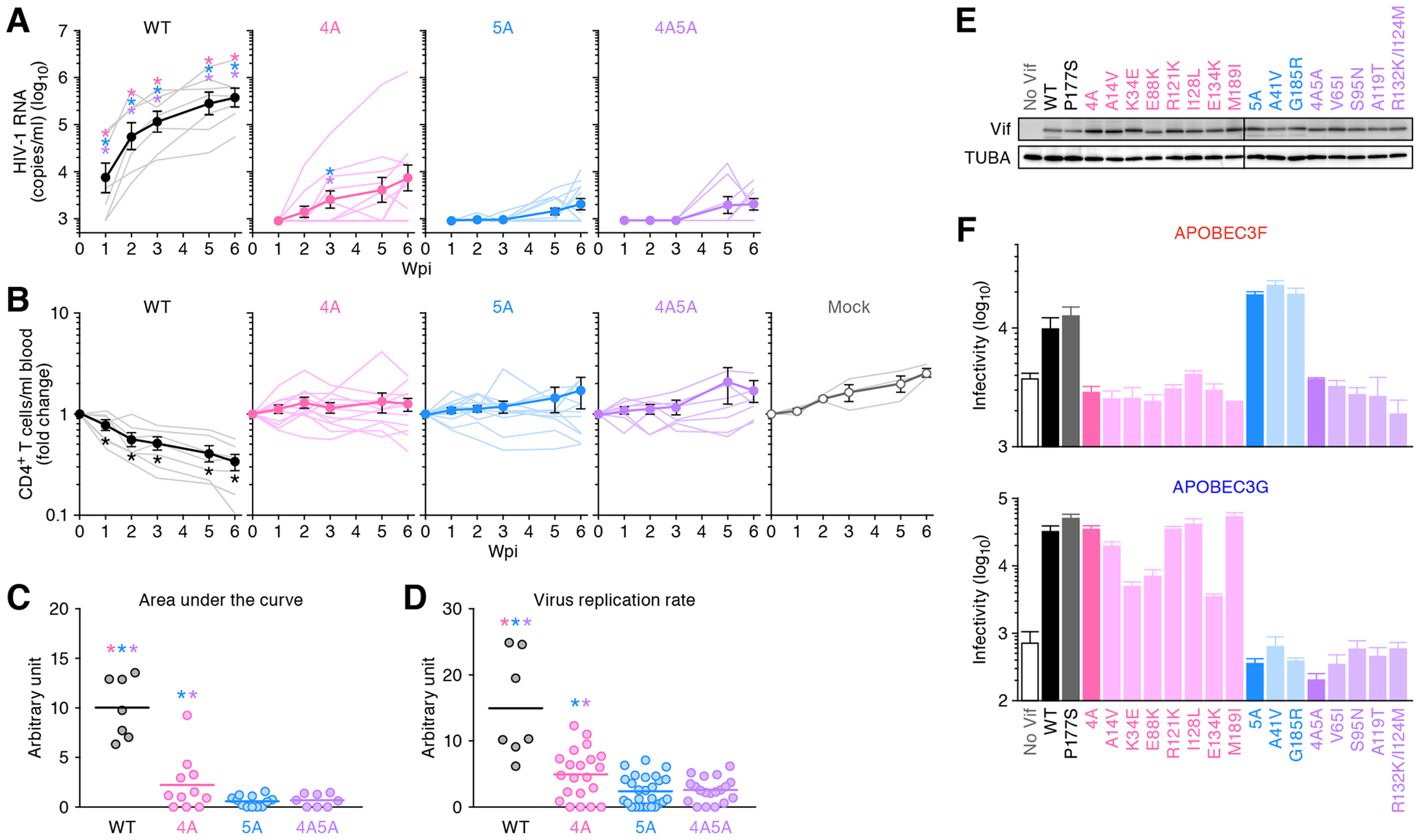 Dynamics of HIV-1 <i>vif</i> mutant infection in humanized mice.