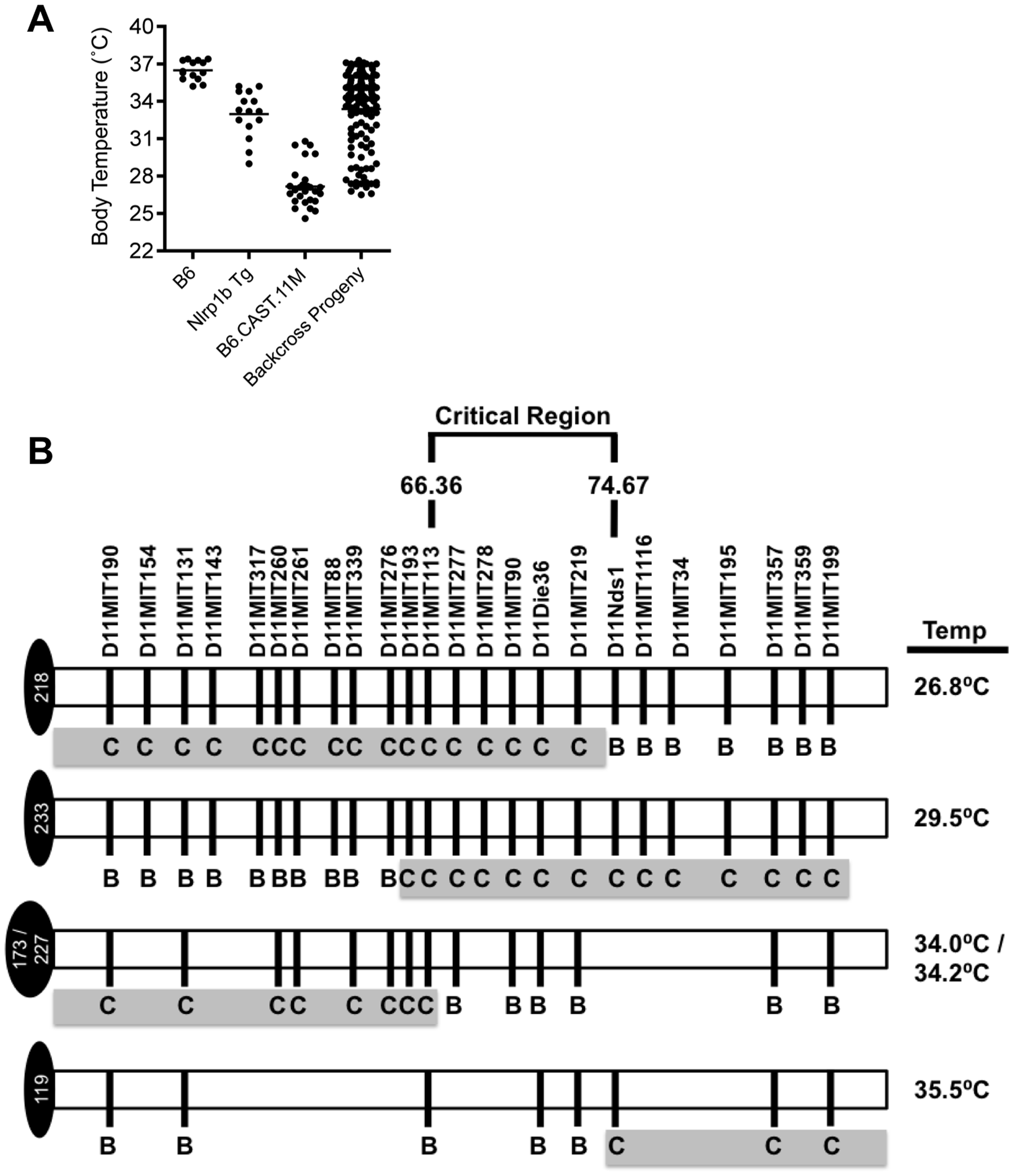 Refining the chromosome 11 critical region bestowing the LT-Induced ERP.
